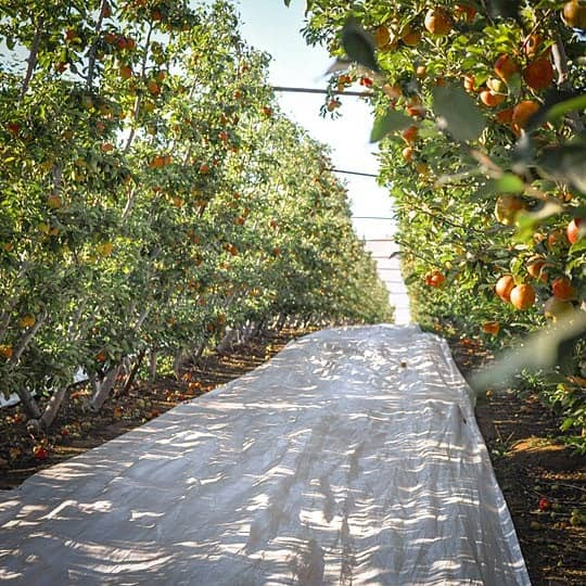 From Orchard to Market: Come Along on an Apple Harvest!: gallery image 3