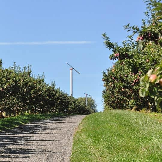 From Orchard to Market: Come Along on an Apple Harvest!: gallery image 4
