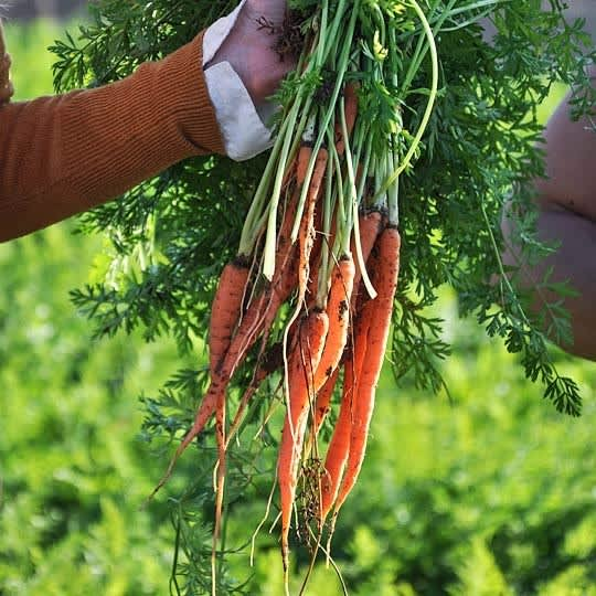 Let's Talk Carrots: Love or Hate, Here's 5 Ways to Use Them
