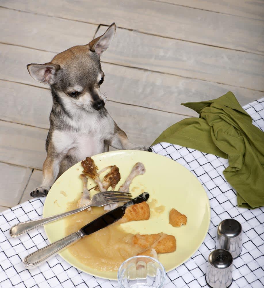Do's & Don'ts: Feeding Table Scraps to Dogs, Cats & Birds