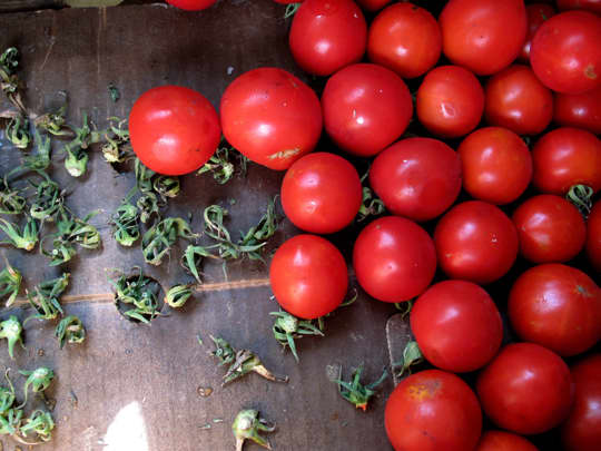 Where Have All the Early Girls Gone? What Happens When Monsanto Buys the Patent to Your Favorite Tomato