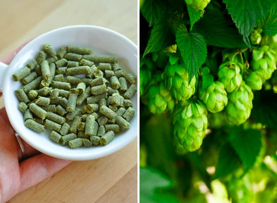 Hold a Hop Cupping! A Fun Way for Aspiring Beer Buffs to Learn About Hops