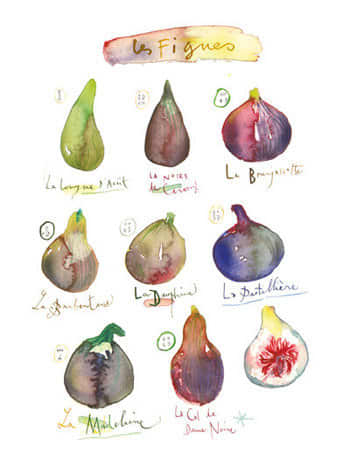 For Your Kitchen Walls: Pretty Watercolor Prints by Lucile Prache: gallery image 5