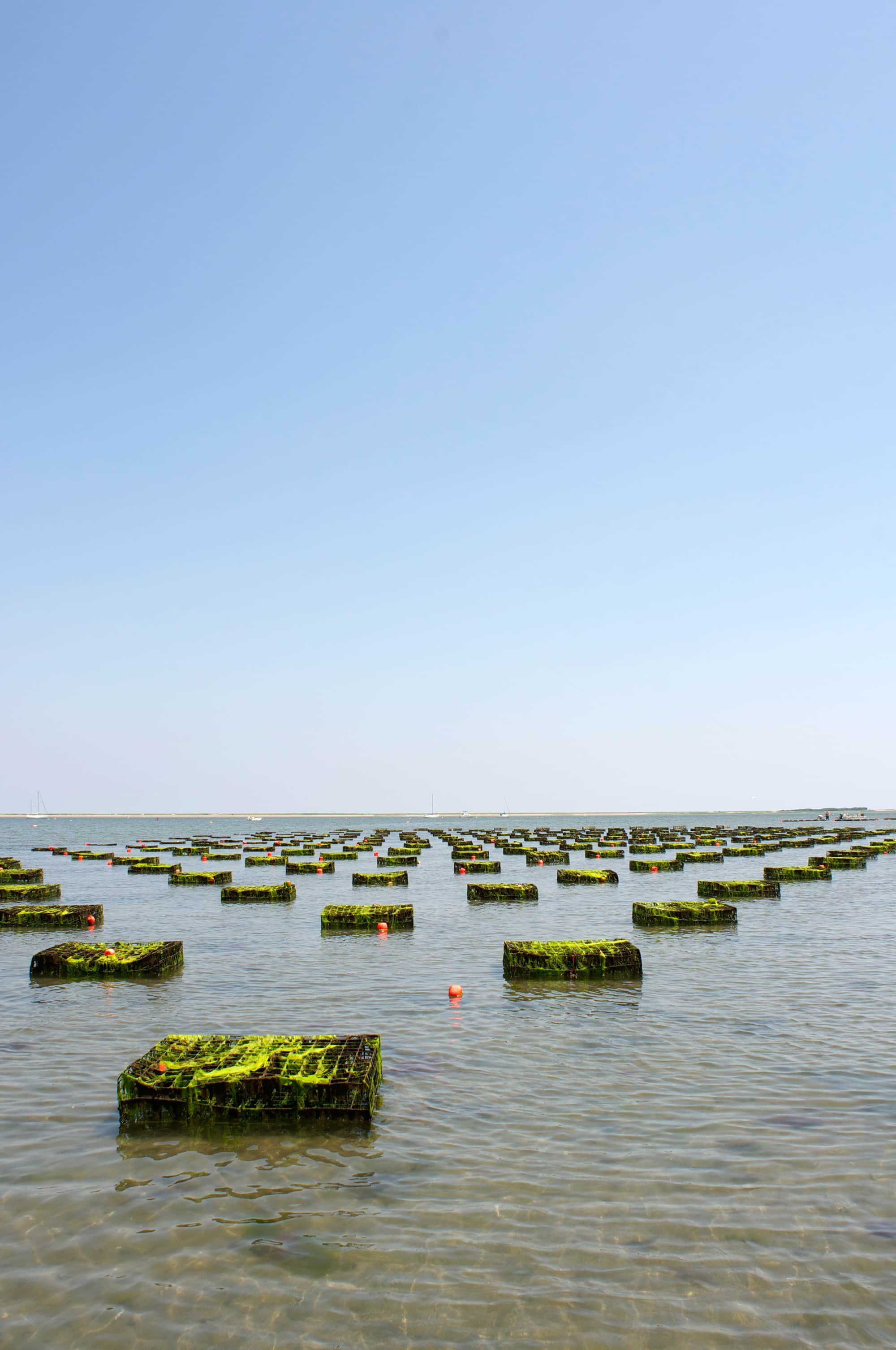How Oysters Are Grown: A Visit to Island Creek Oysters in Duxbury, Massachusetts: gallery image 13