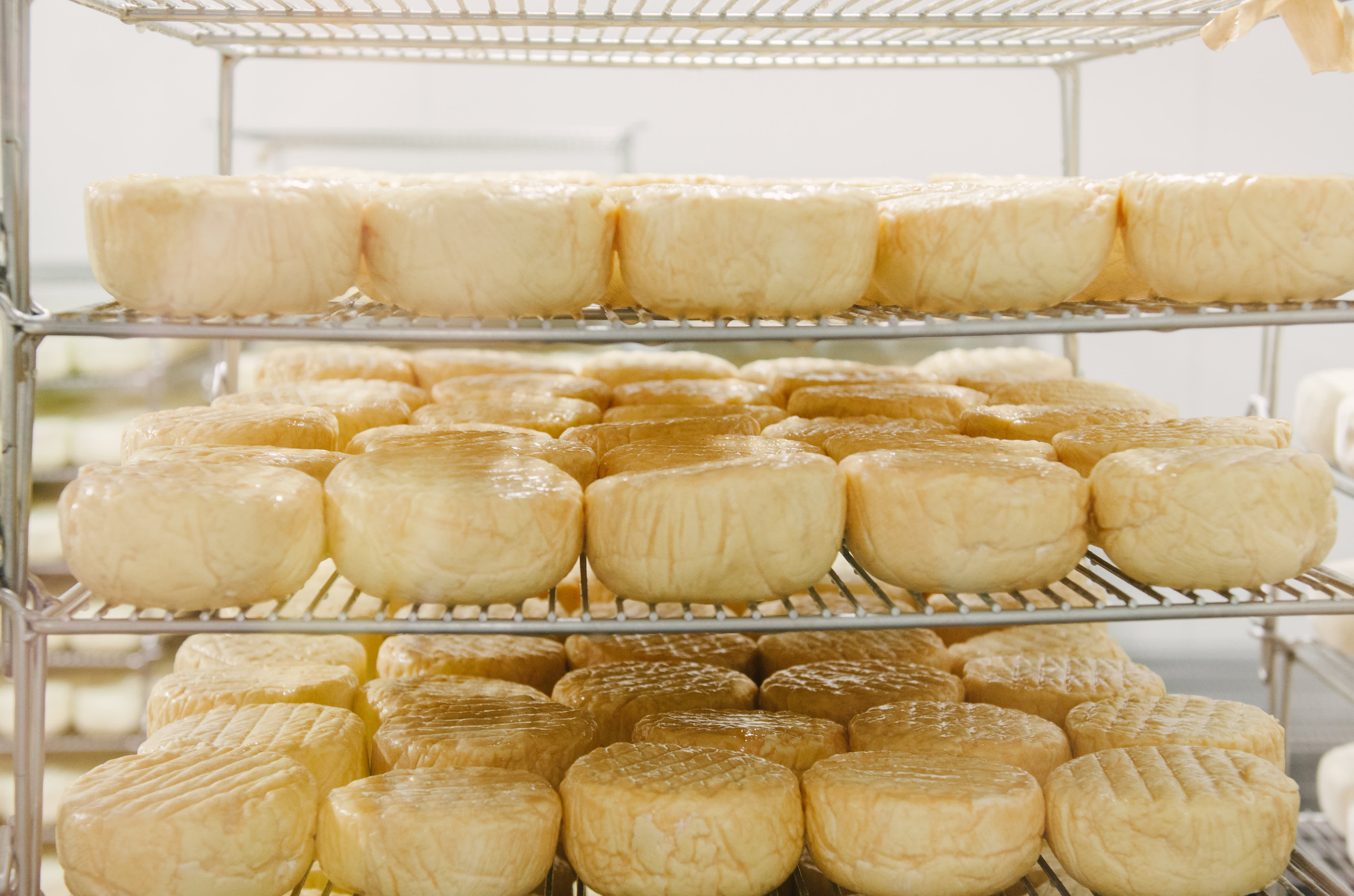 Making Cheese & Making Friends: A Visit With the Ladies of Cowgirl Creamery: gallery image 12