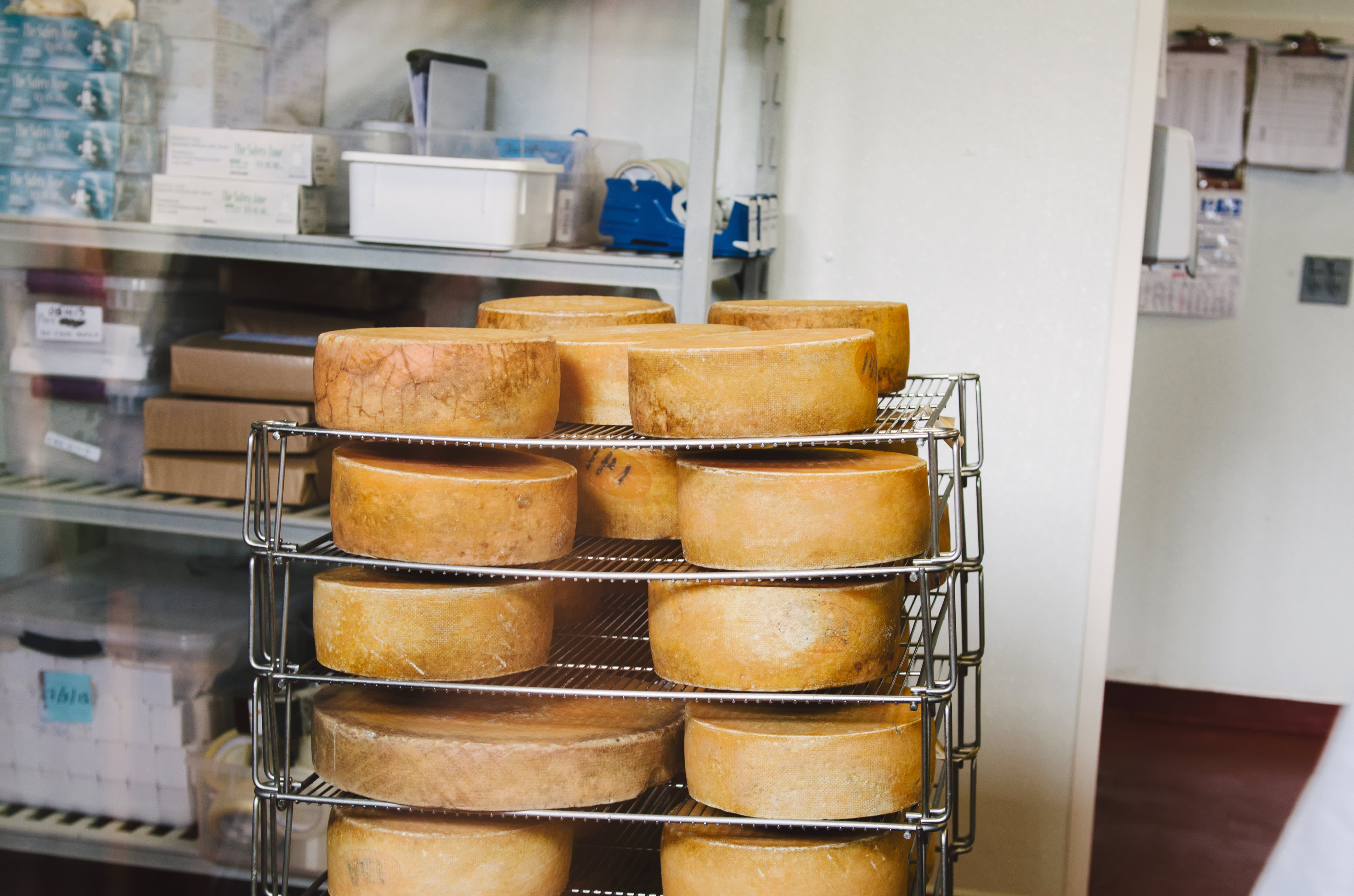 Making Cheese & Making Friends: A Visit With the Ladies of Cowgirl Creamery: gallery image 10