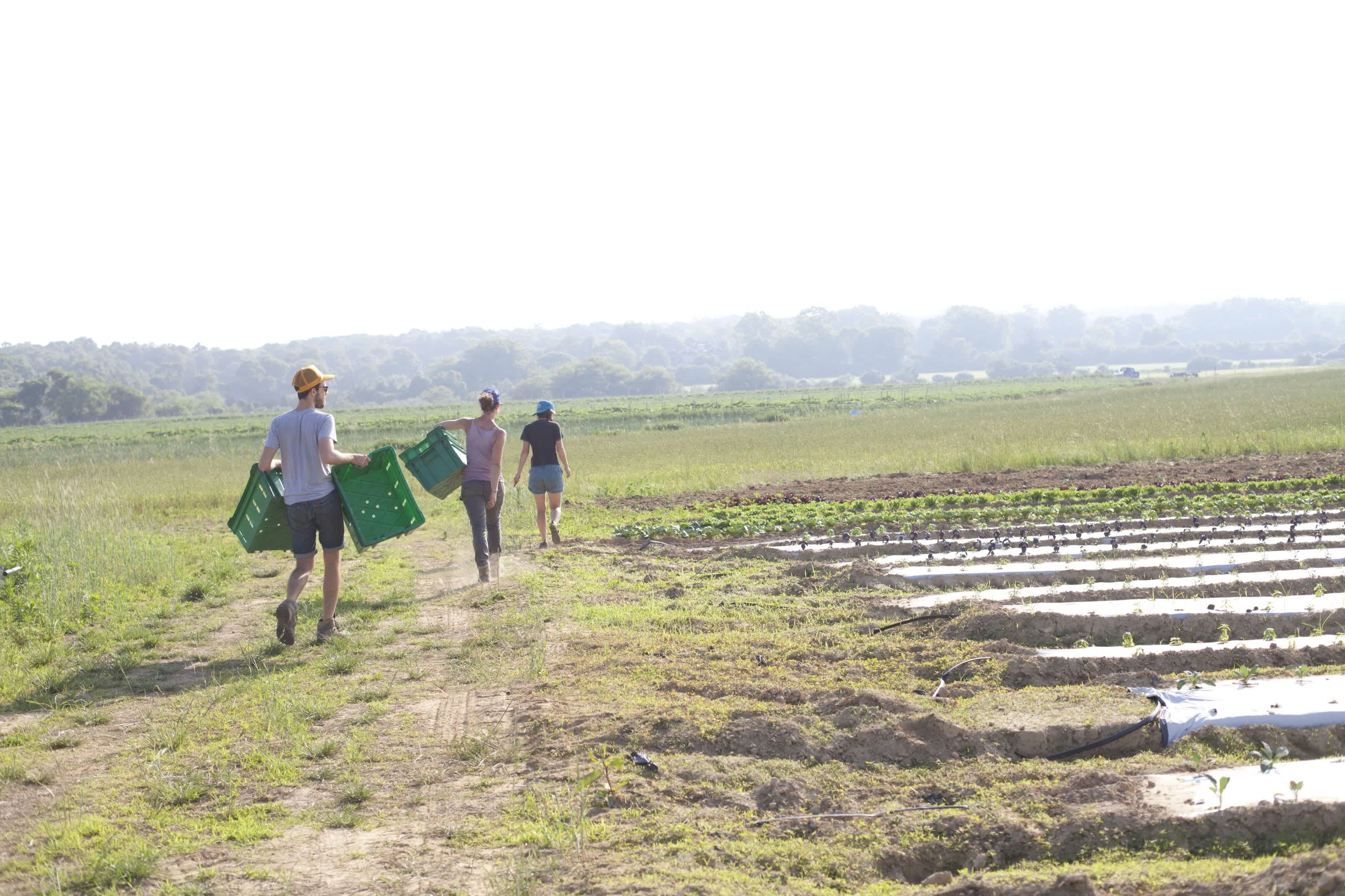 A Day in the Life of a Farm: gallery image 5