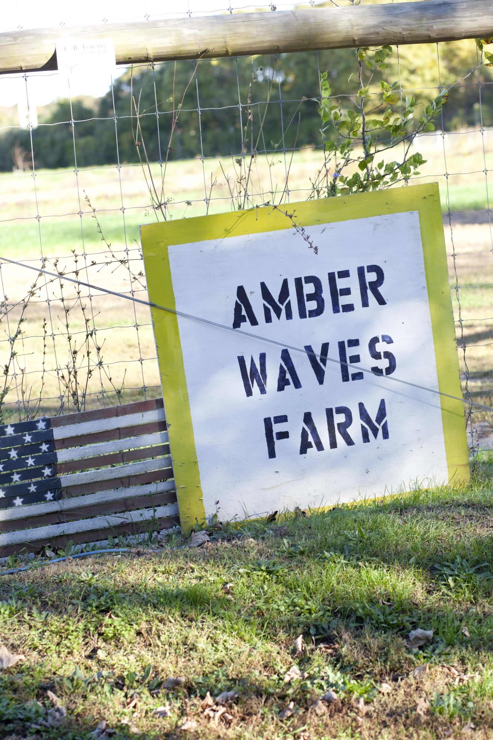 How the Farm Puts Itself to Bed: The Last Day of the Season at Amber Waves Farm: gallery image 2