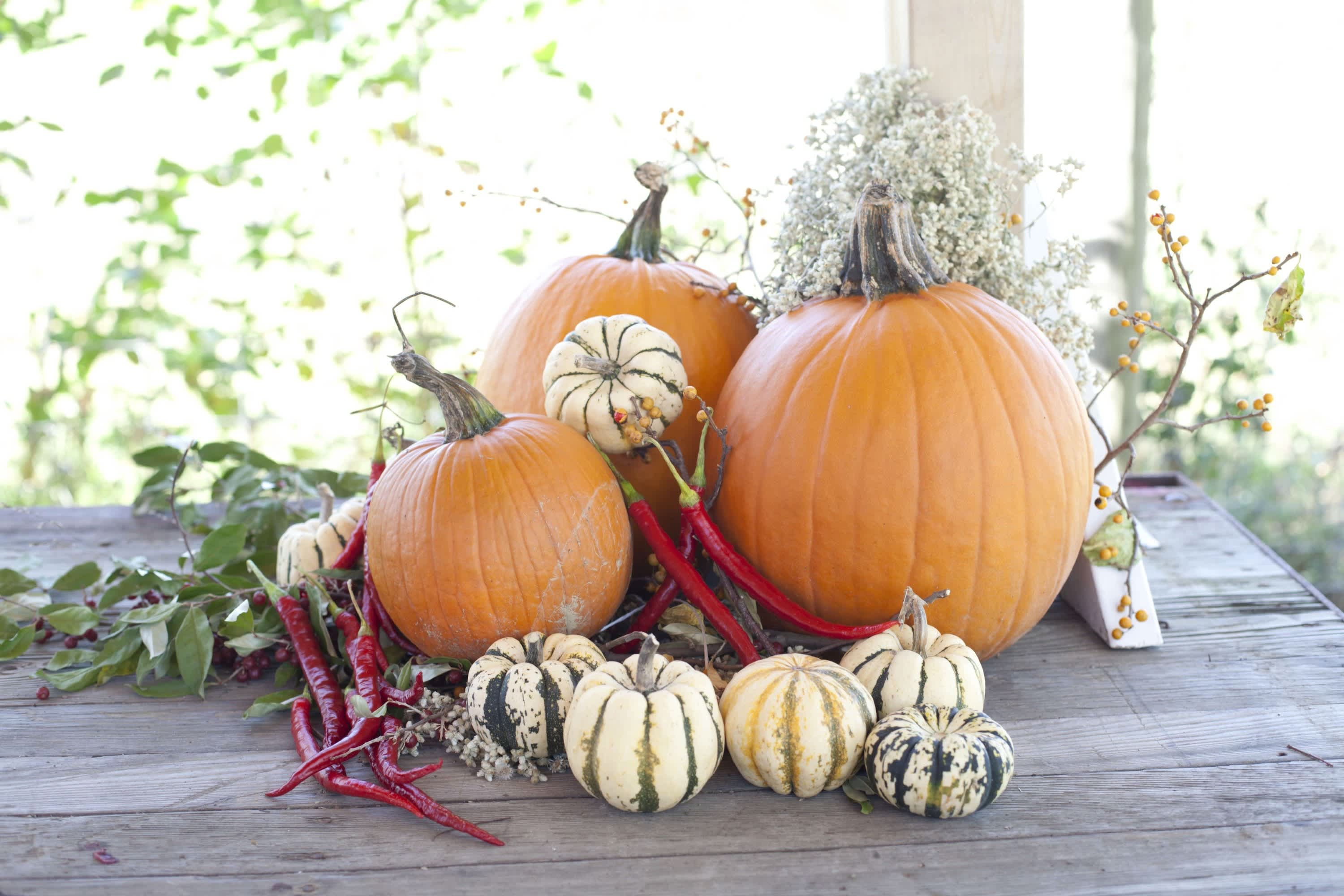 How Farmers Celebrate the End of a Season: The OktoberFeast Potluck at Amber Waves Farm: gallery image 26