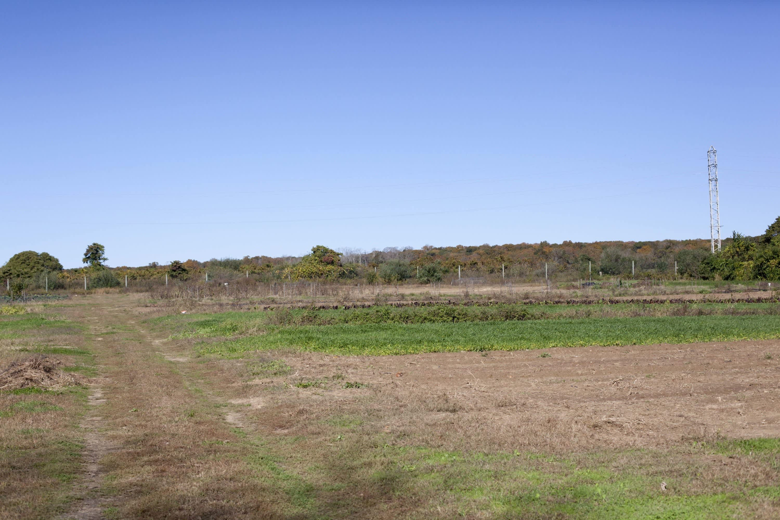 How the Farm Puts Itself to Bed: The Last Day of the Season at Amber Waves Farm: gallery image 36