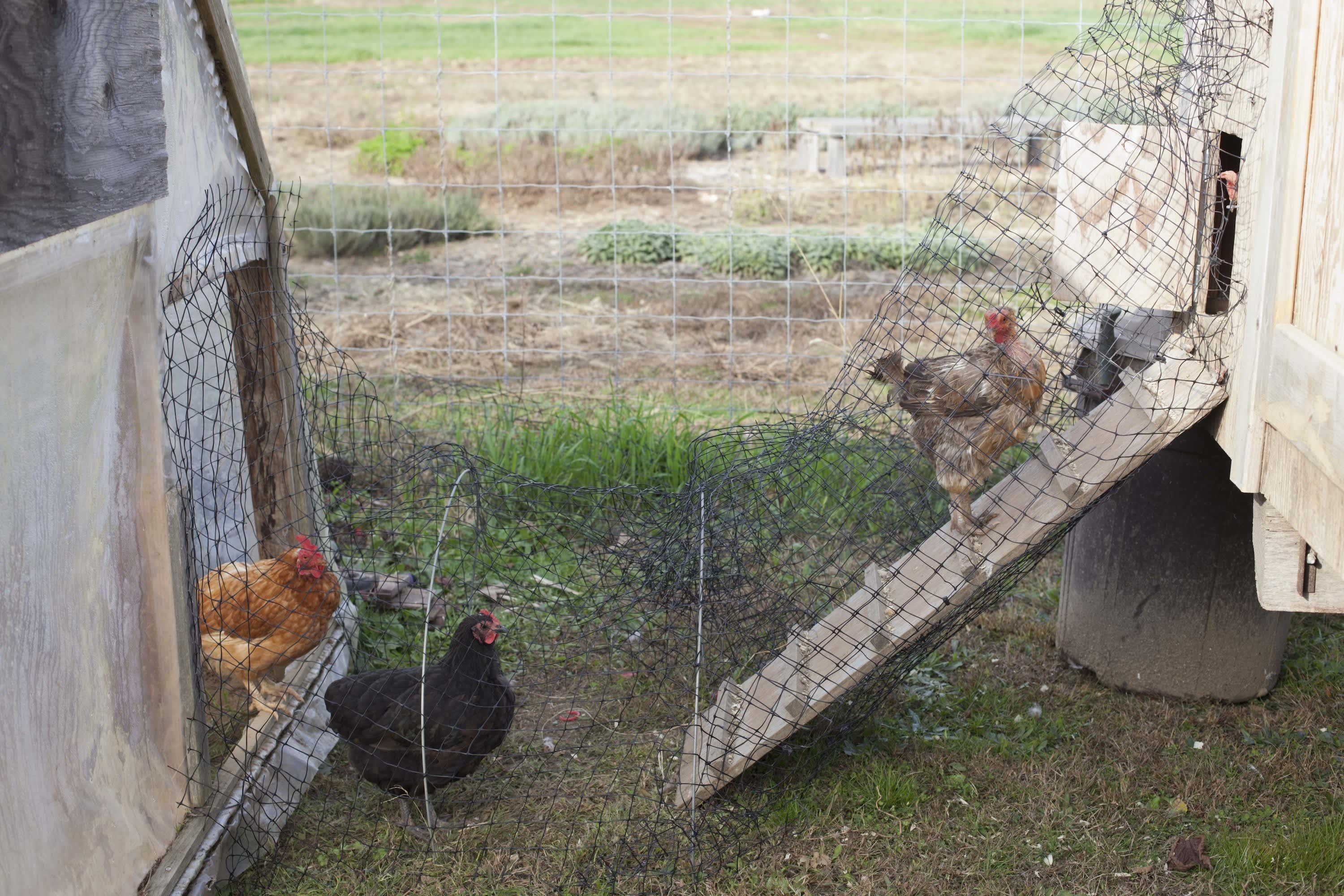 How the Farm Puts Itself to Bed: The Last Day of the Season at Amber Waves Farm: gallery image 44