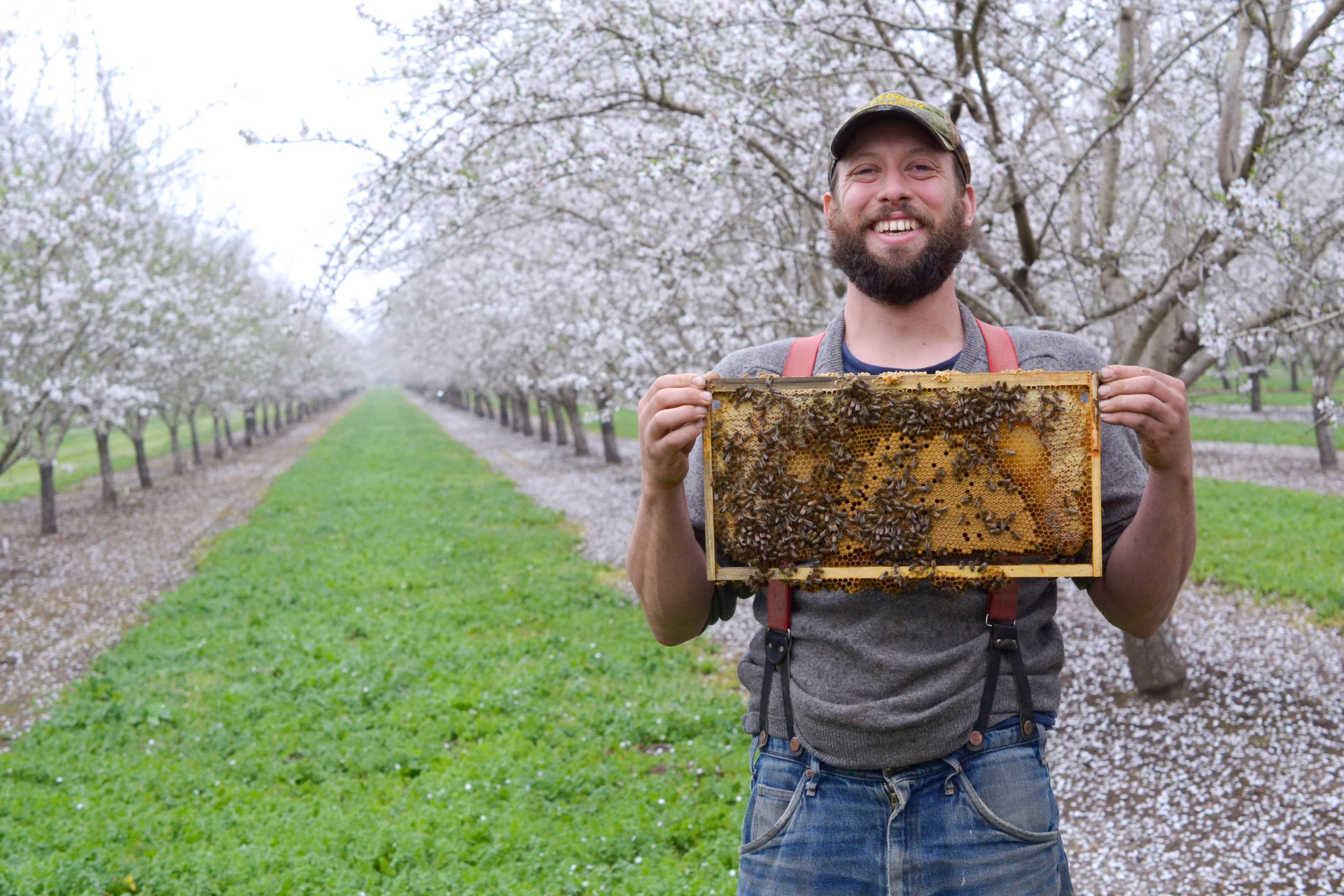 Spring Break with Millions of Bees: Why Beekeepers Take a California Road Trip Every Spring: gallery image 9