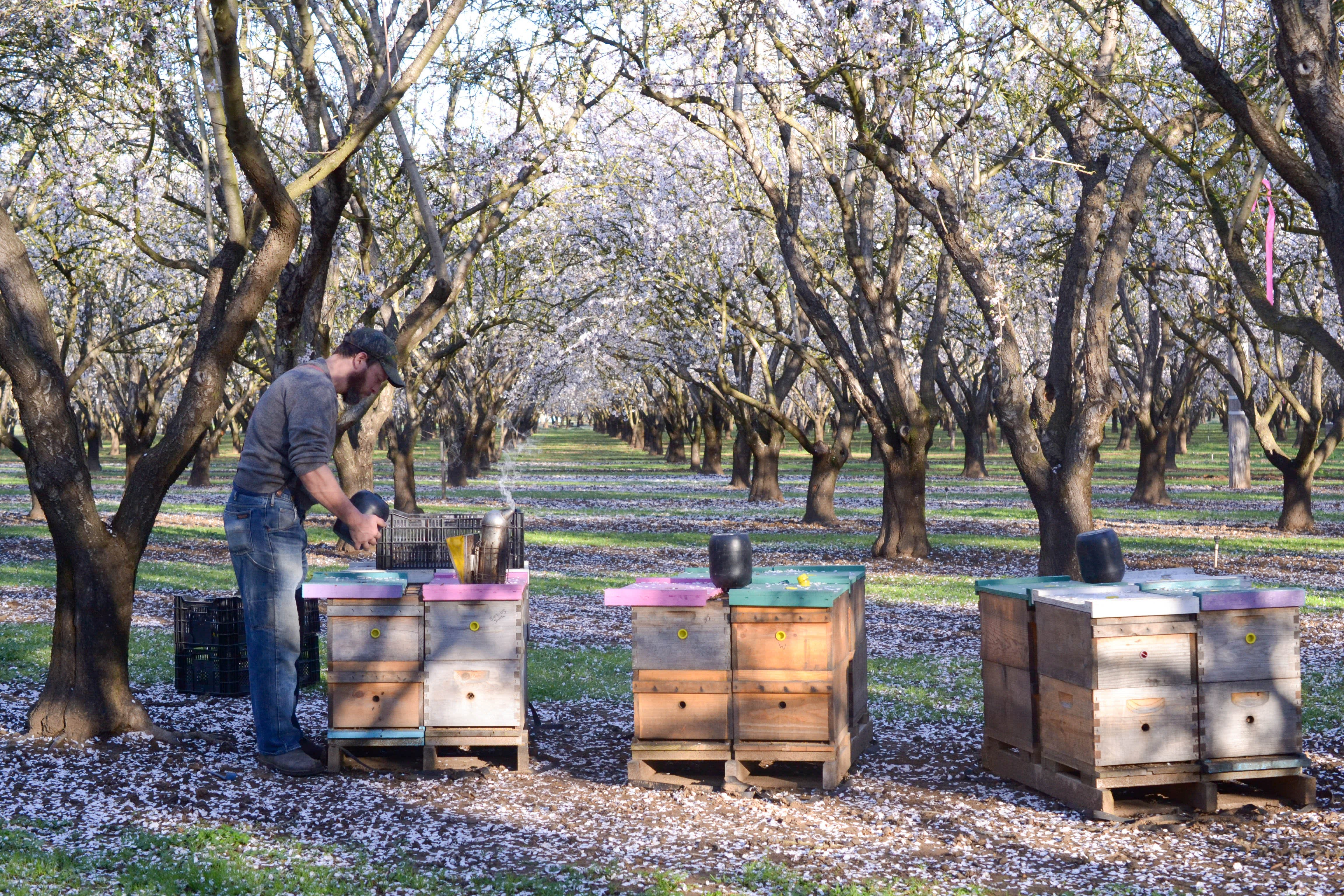 Spring Break with Millions of Bees: Why Beekeepers Take a California Road Trip Every Spring: gallery image 5