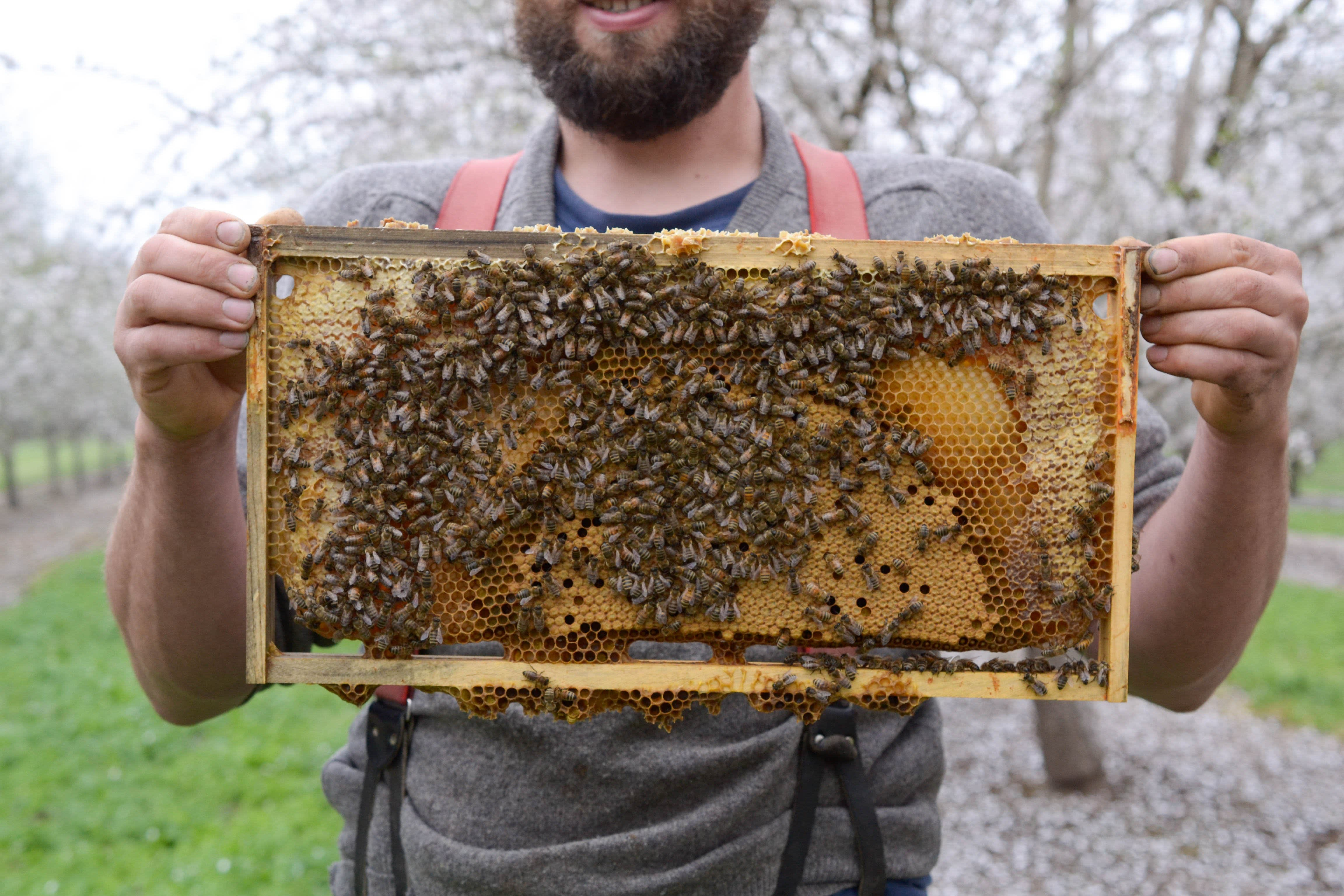 Spring Break with Millions of Bees: Why Beekeepers Take a California Road Trip Every Spring: gallery image 10
