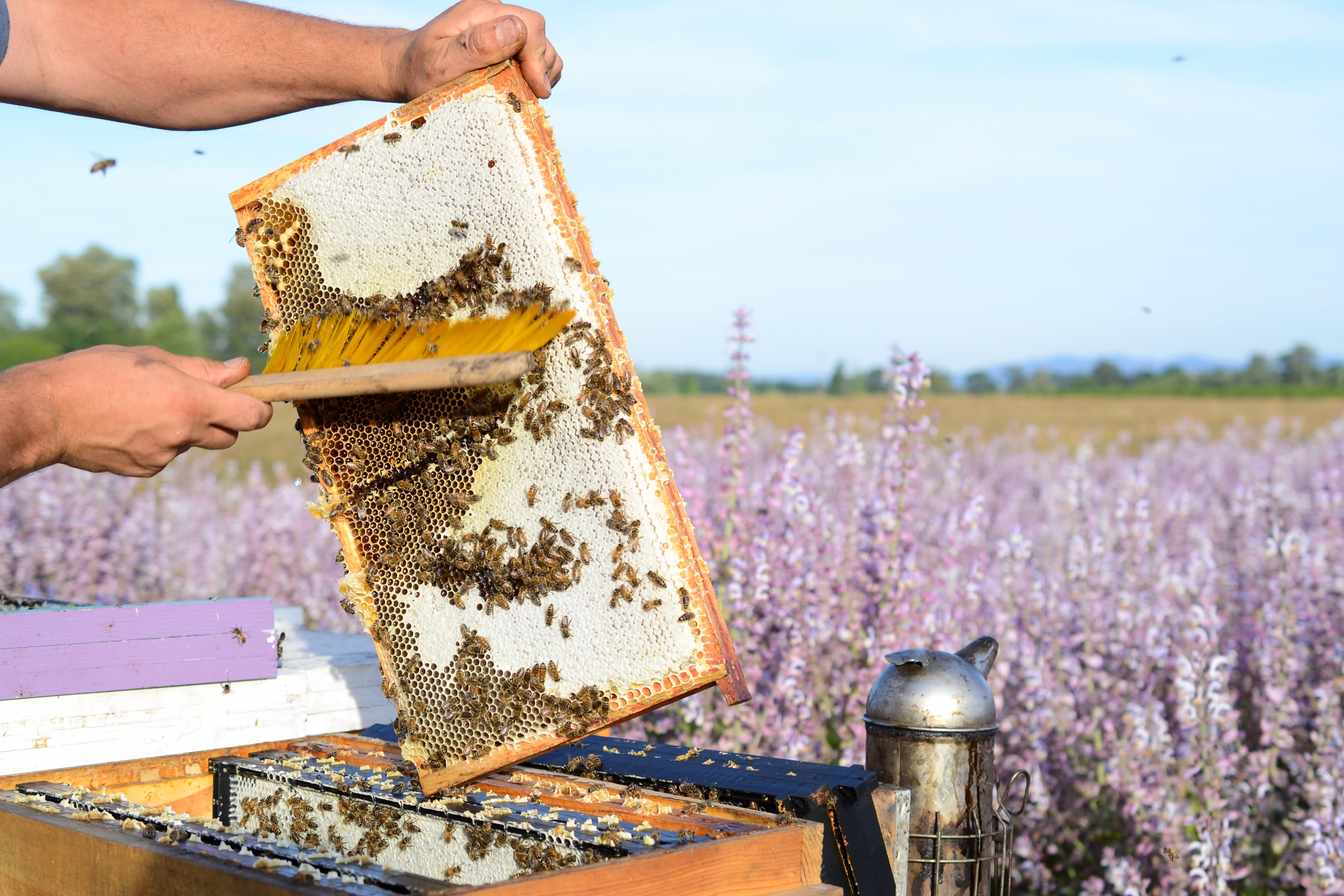 How a Migratory Beekeeper Harvests and Extracts Honey from His Fields in Oregon: gallery image 10