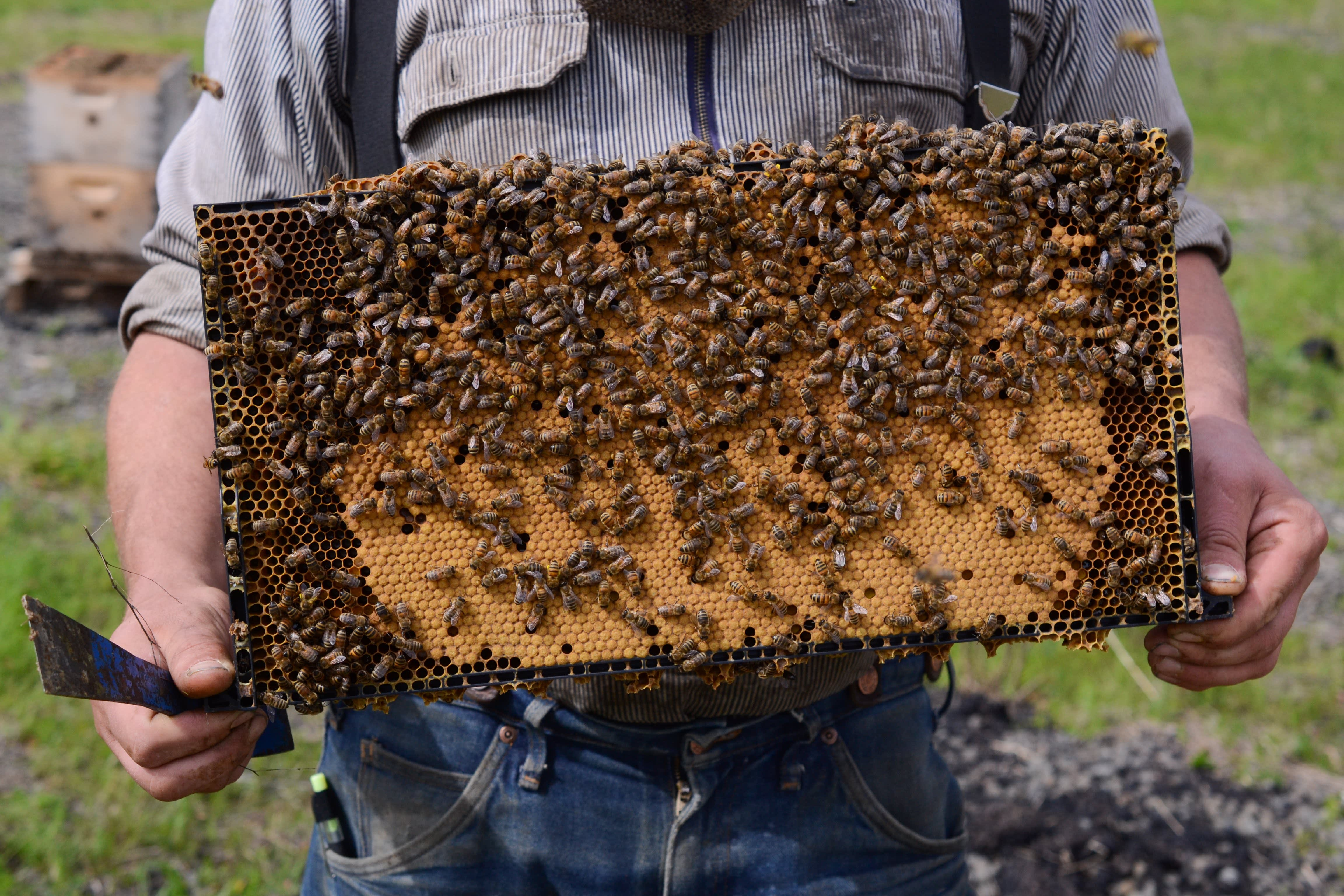 How Henry Storch Became a Professional Migratory Beekeeper: gallery image 6