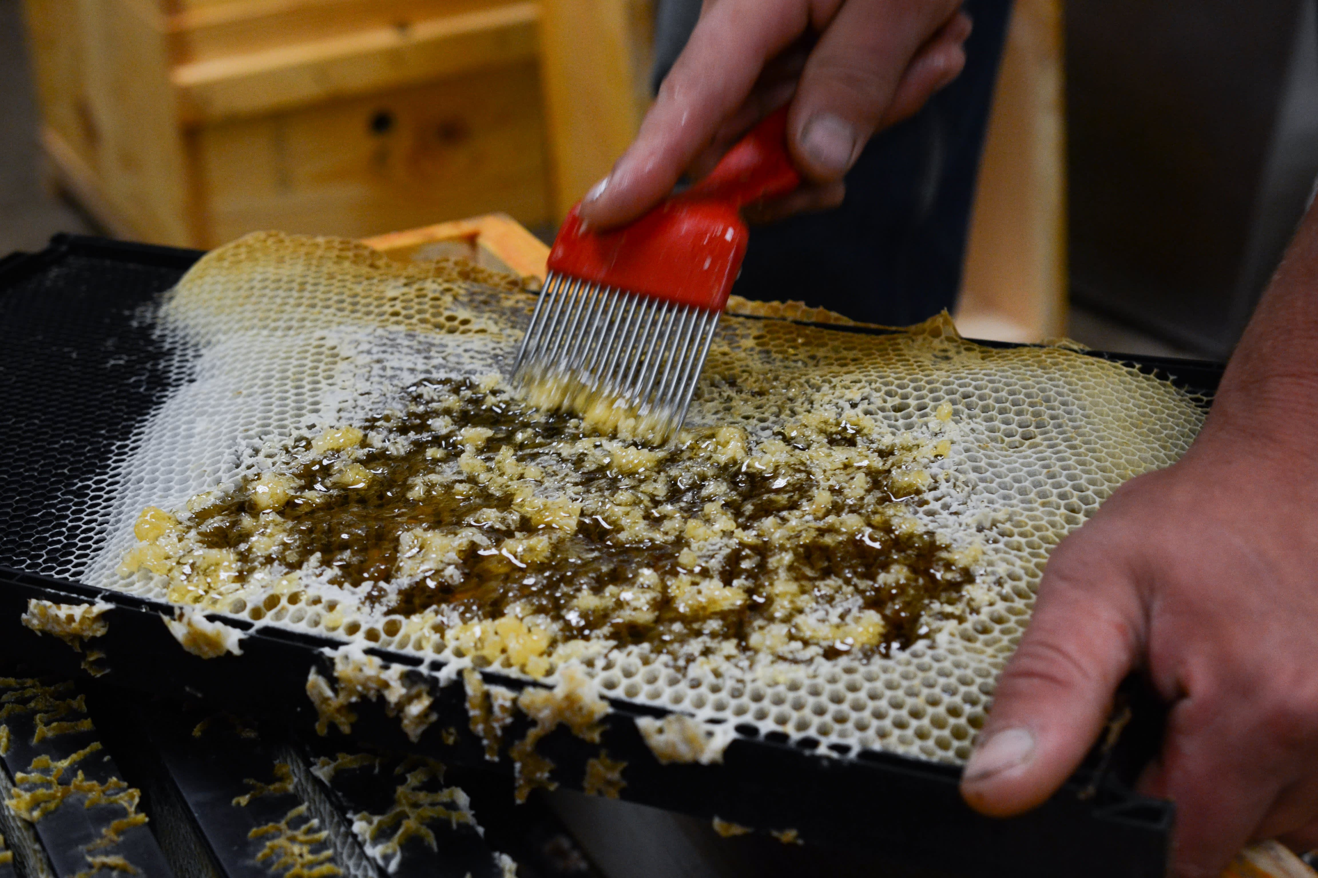 How a Migratory Beekeeper Harvests and Extracts Honey from His Fields in Oregon: gallery image 5