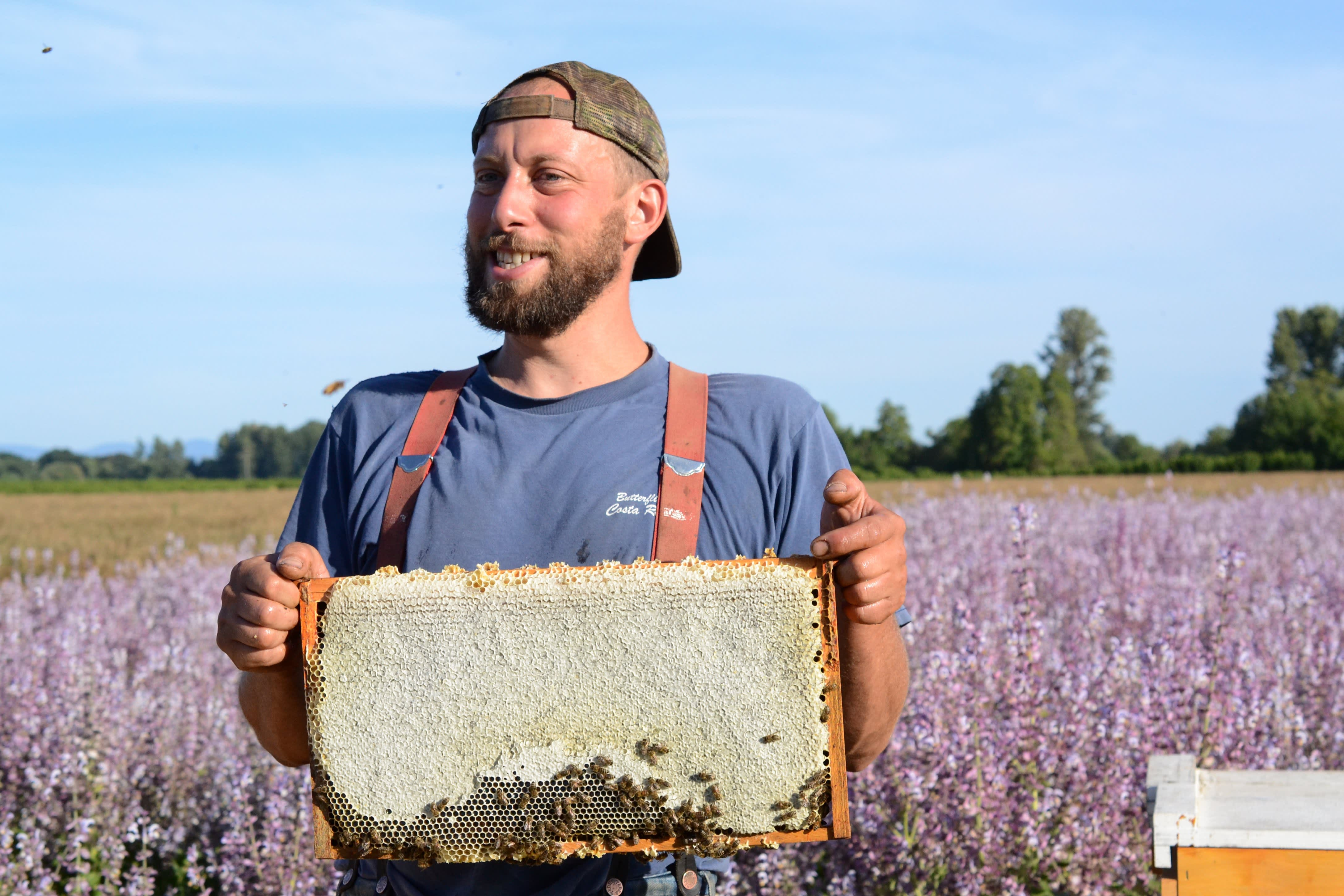 How a Migratory Beekeeper Harvests and Extracts Honey from His Fields in Oregon: gallery image 7