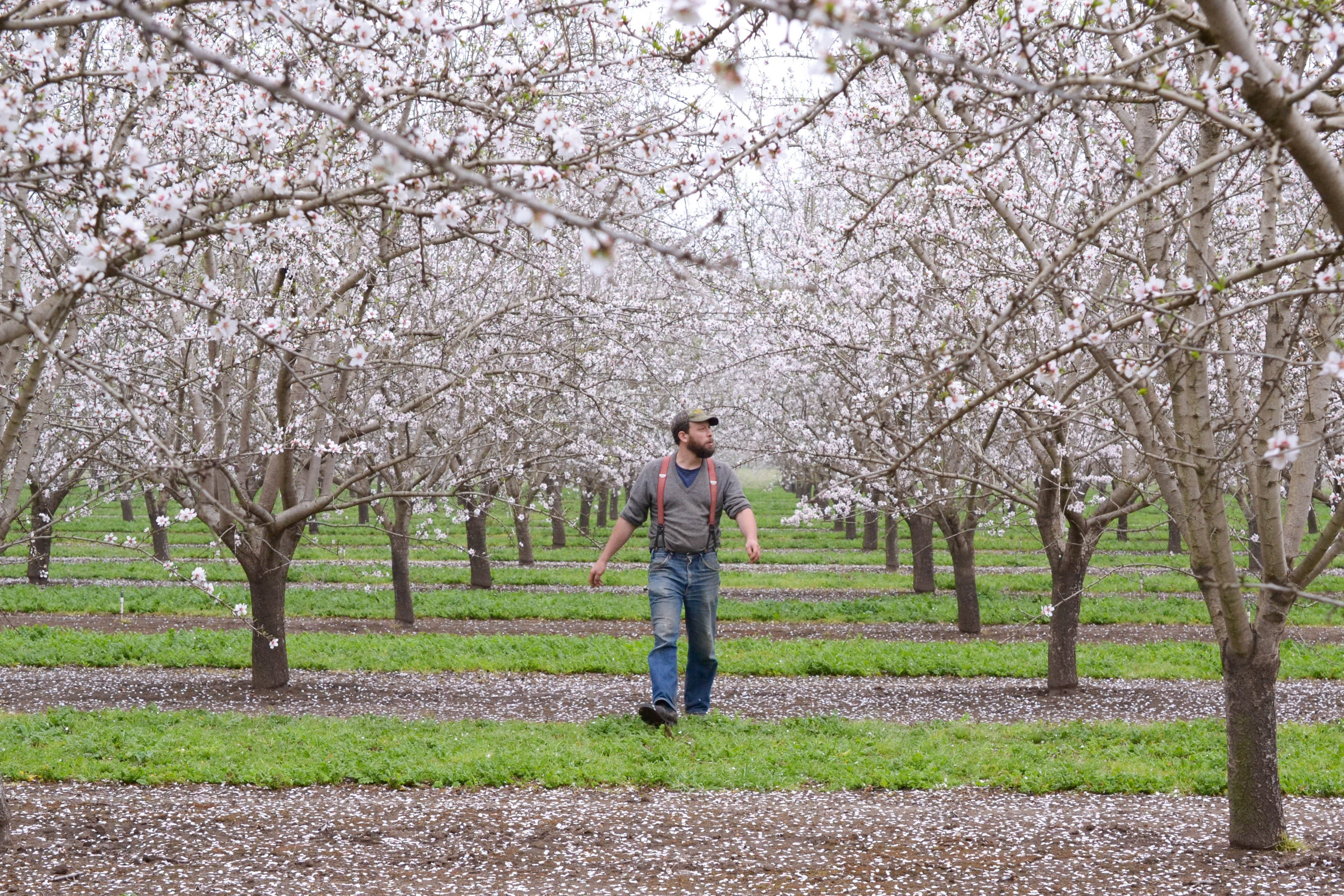 Spring Break with Millions of Bees: Why Beekeepers Take a California Road Trip Every Spring: gallery image 1