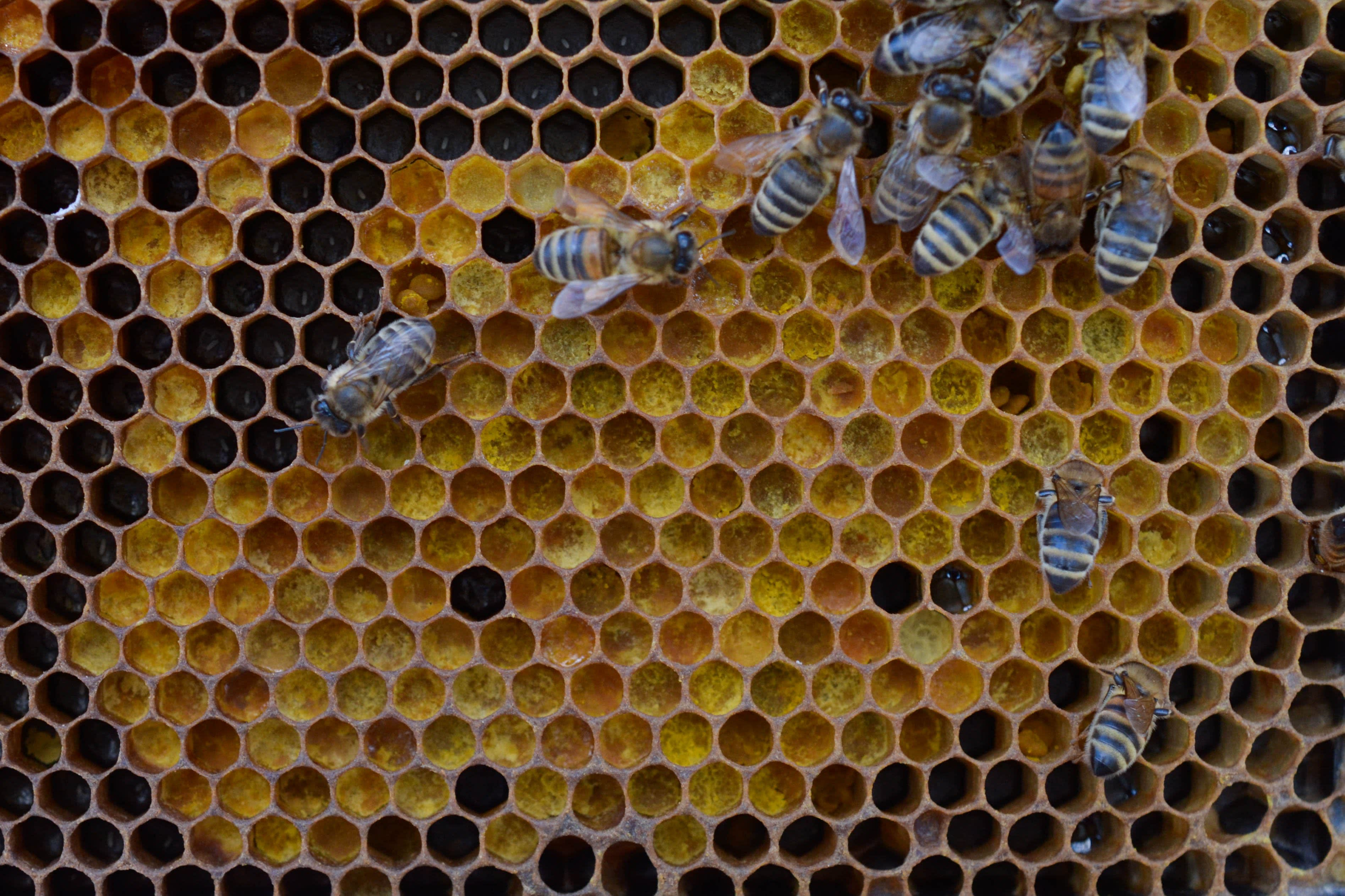 Spring Break with Millions of Bees: Why Beekeepers Take a California Road Trip Every Spring: gallery image 8