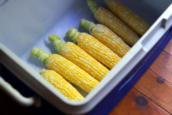 Have You Ever Heard of Cooler Corn?