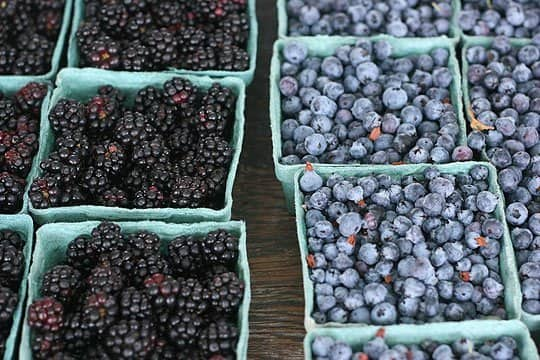 Blueberries could reduce the risk of Alzheimer's Disease