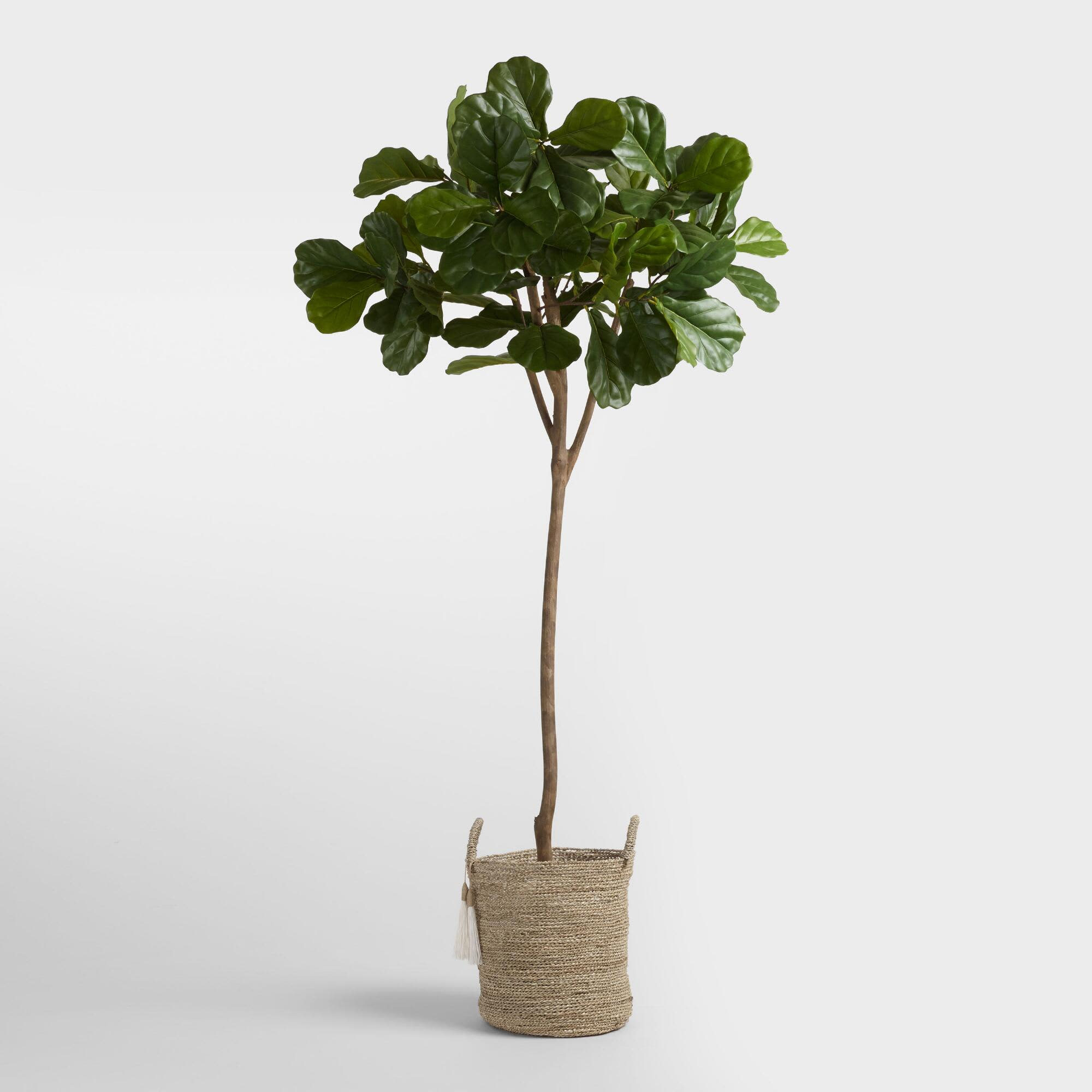 A Very Real Guide to Buying Very Fake Plants: gallery image 3