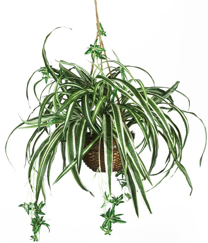 A Very Real Guide to Buying Very Fake Plants: gallery image 7