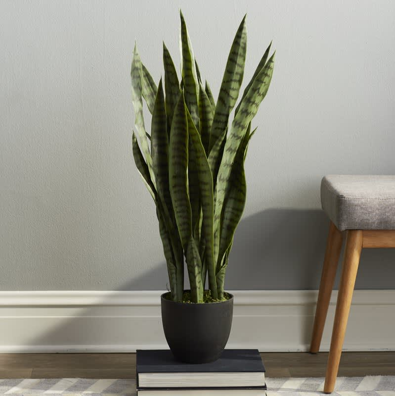 A Very Real Guide to Buying Very Fake Plants: gallery image 9