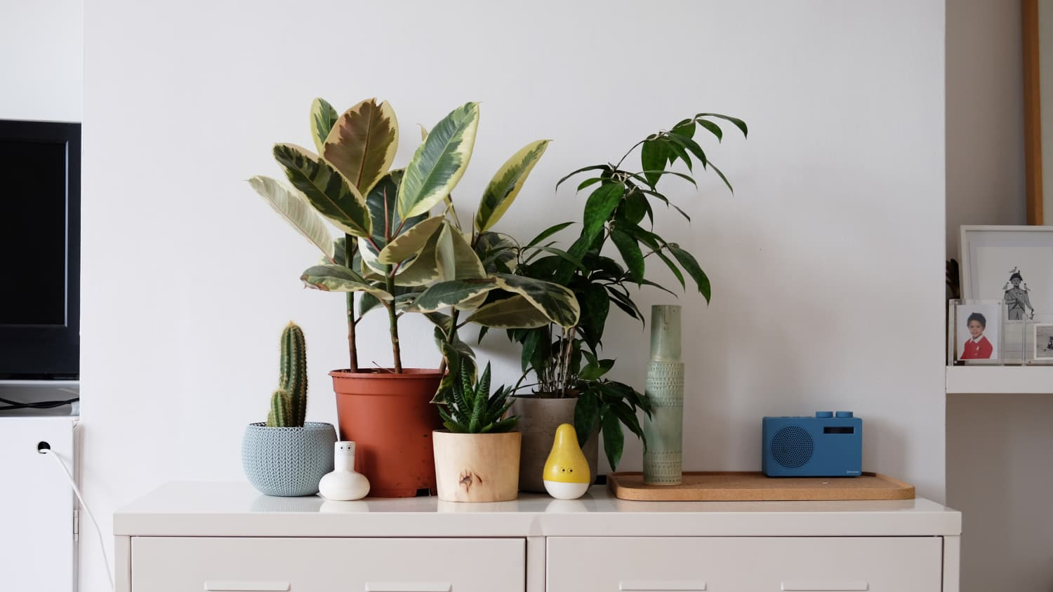 Low Maintenance House Plants - How Often Should You Water