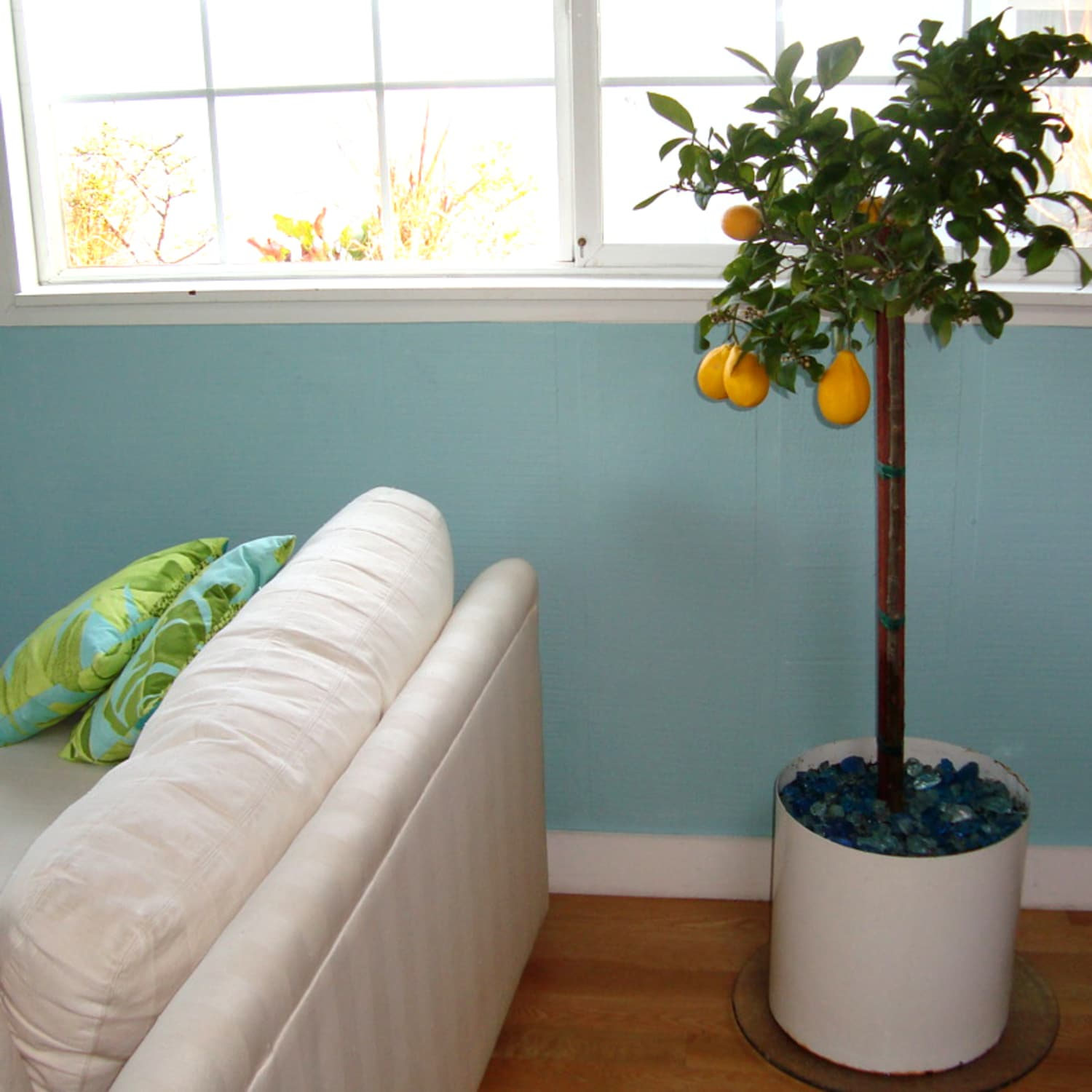 How To Plant And Keep An Indoor Lemon Tree Apartment Therapy