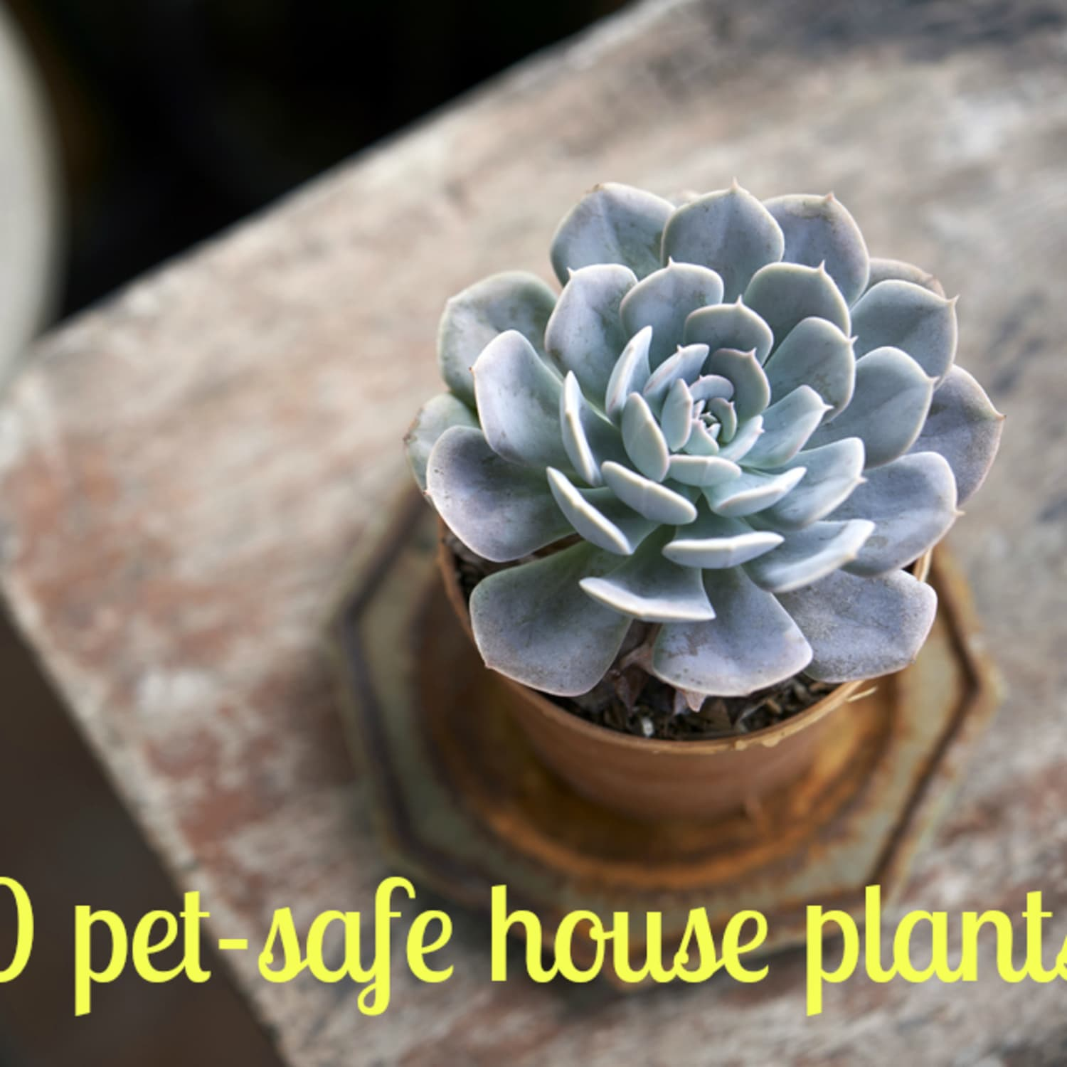 Keeping Your Pets Safe: 10 Non-Toxic House Plants ... on best houseplants, names of indoor cactus, tropical houseplants, low light houseplants, 10 easy houseplants, names of vegetables, names of plants, names of indoor begonias, names of flowers, most common houseplants, names of shrubs, names of indoor trees, names of vines, names of indoor palms, names of books,