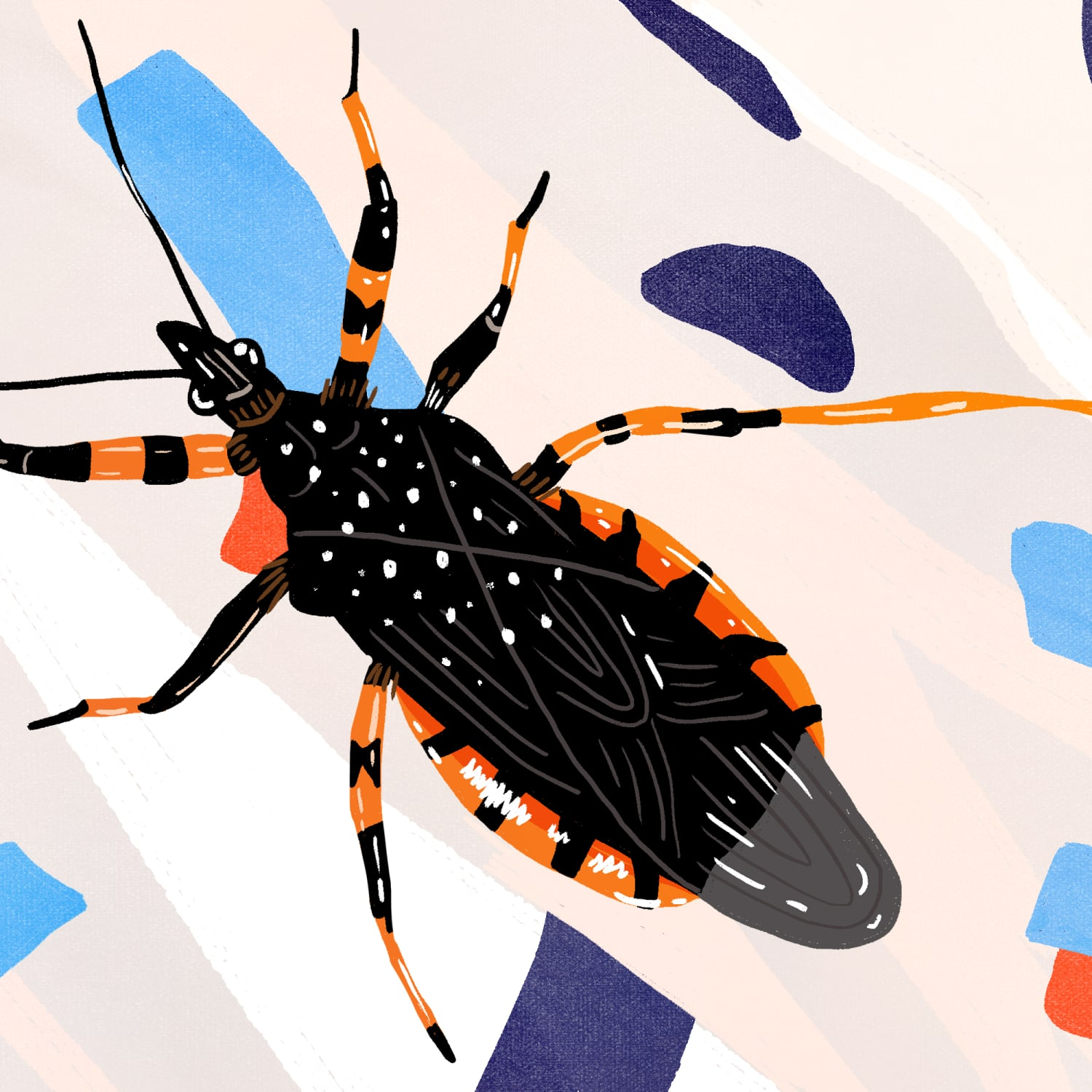 Everything to Know About Assassin or Kissing Bugs