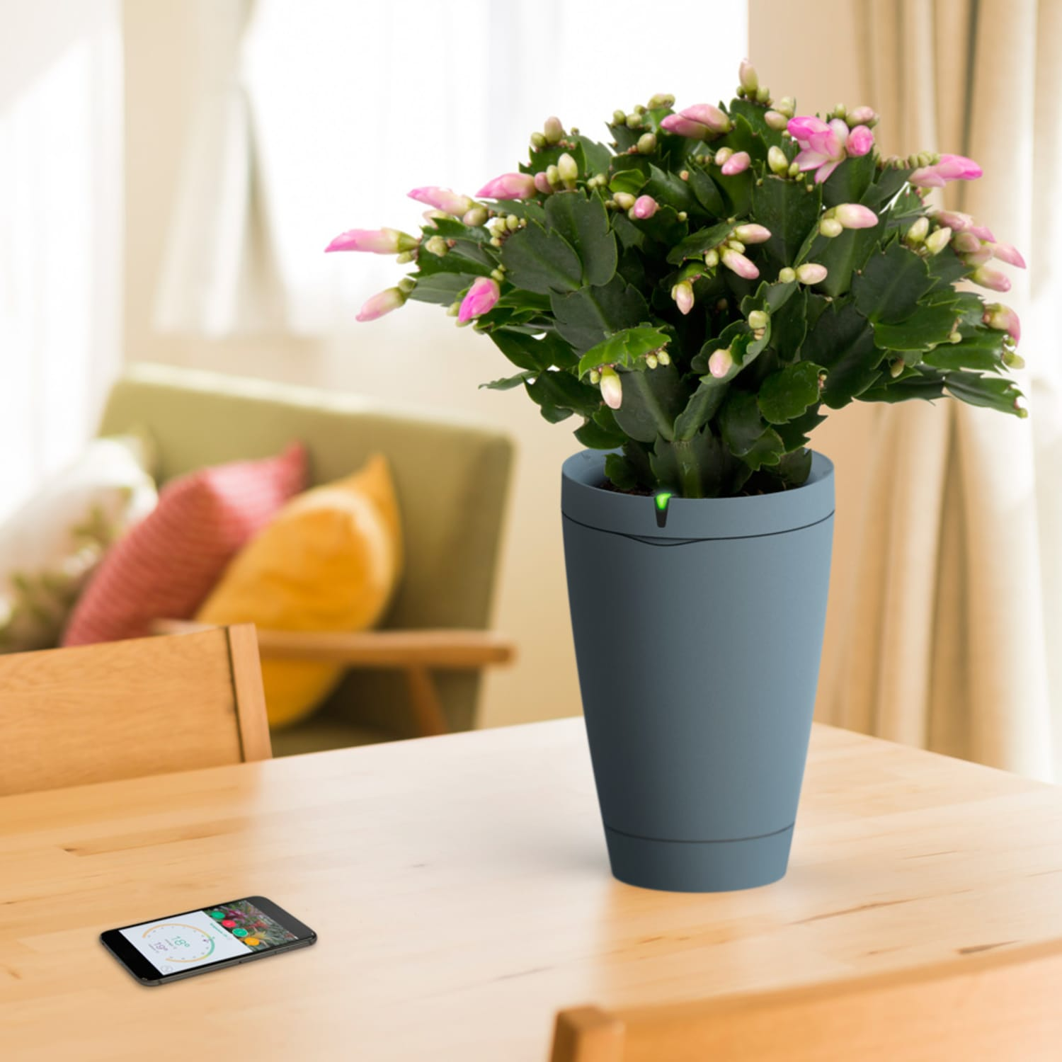 Smart Home Review: Black Thumbs Will Love Parrot's Self-Watering