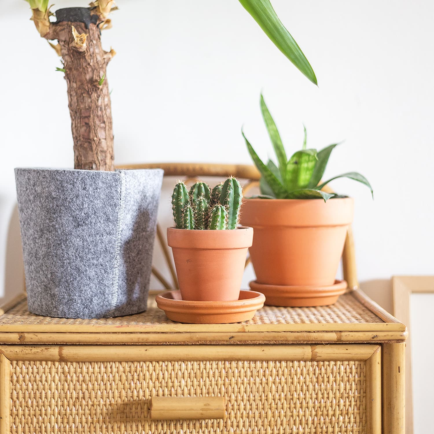 How to Care for Plants in Pots without Drainage Holes