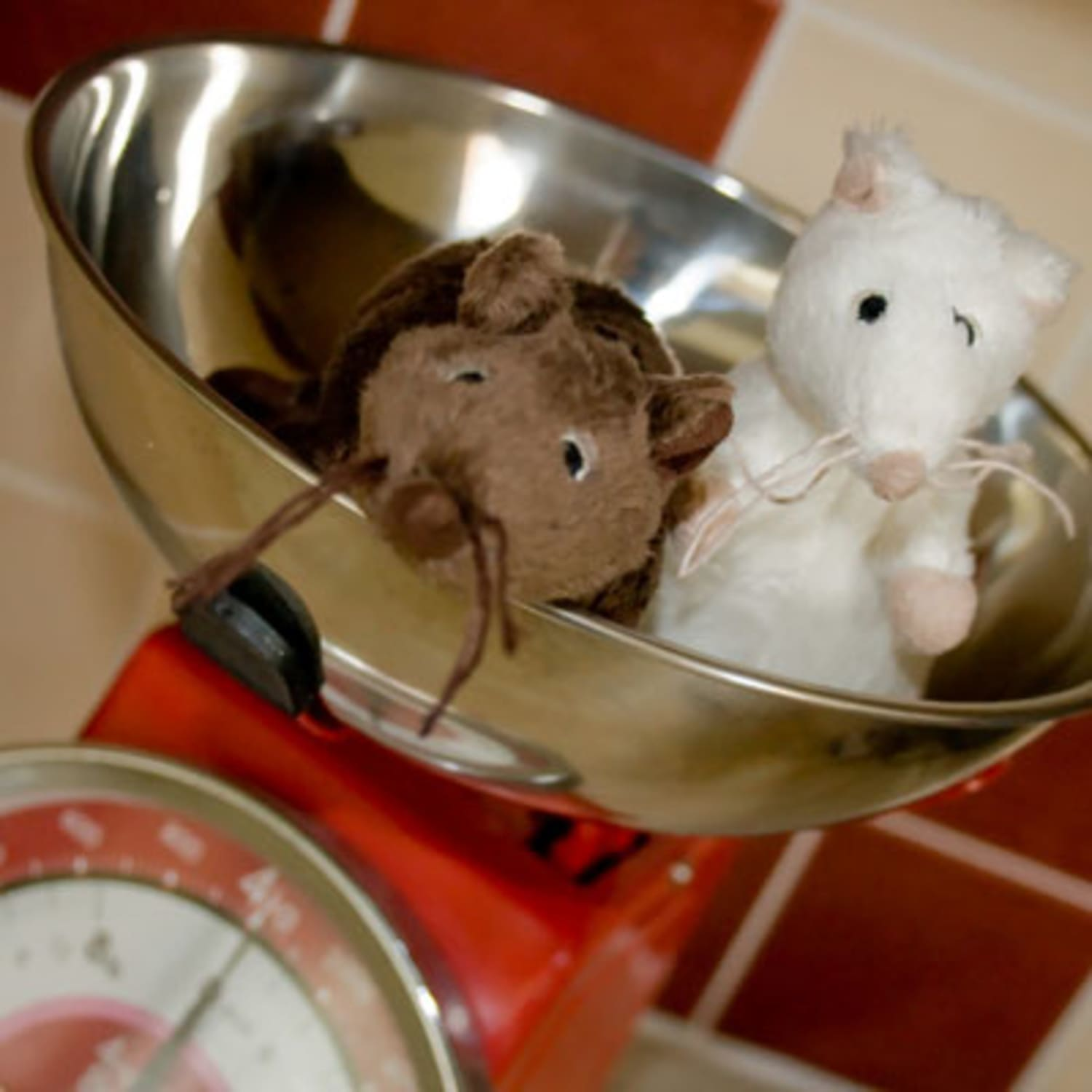 Mice In the Kitchen! How Have You Dealt With Mice? | Kitchn