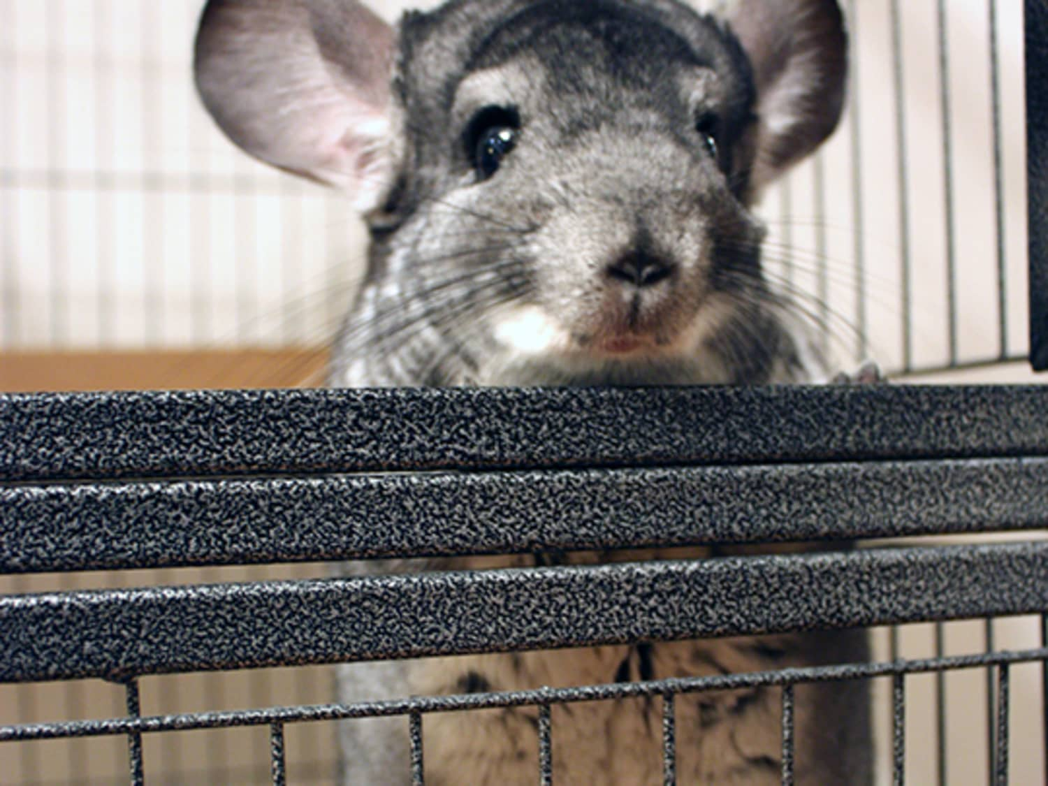 Tips For Negotiating a Lease with Exotic Pets | Apartment