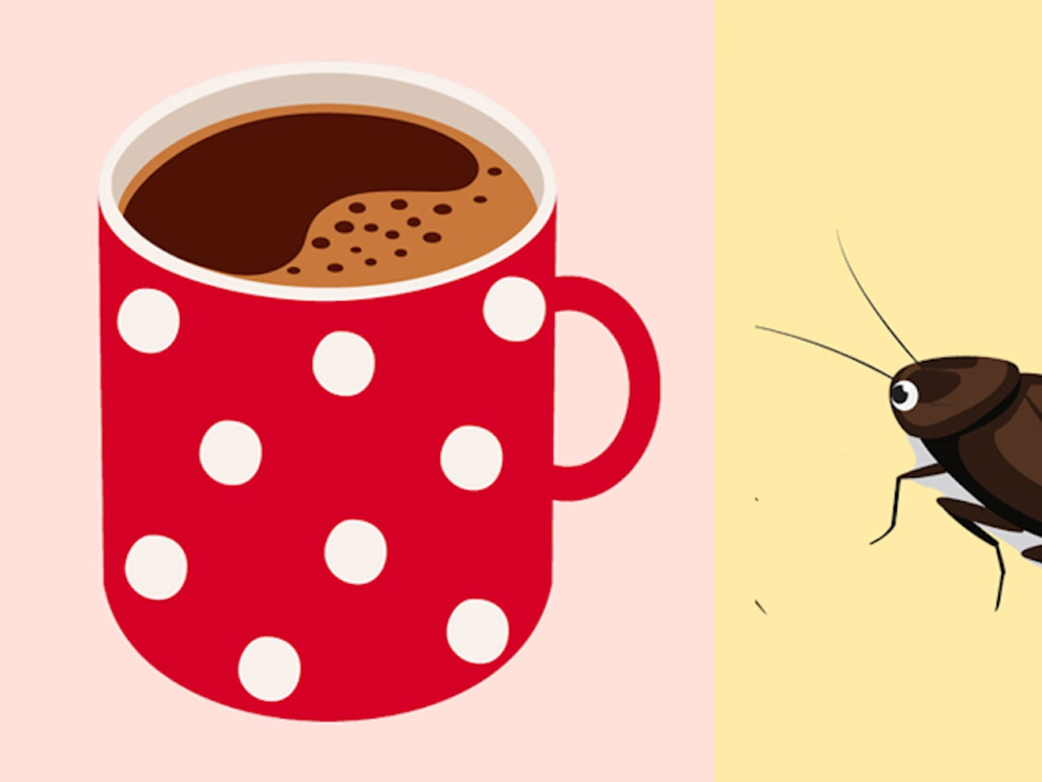 Roaches in Your Kitchen? Check the Coffee Maker  | Kitchn