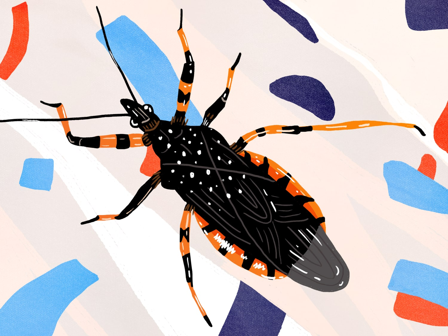 2c8c035192 Everything to Know About Assassin or Kissing Bugs | Apartment Therapy
