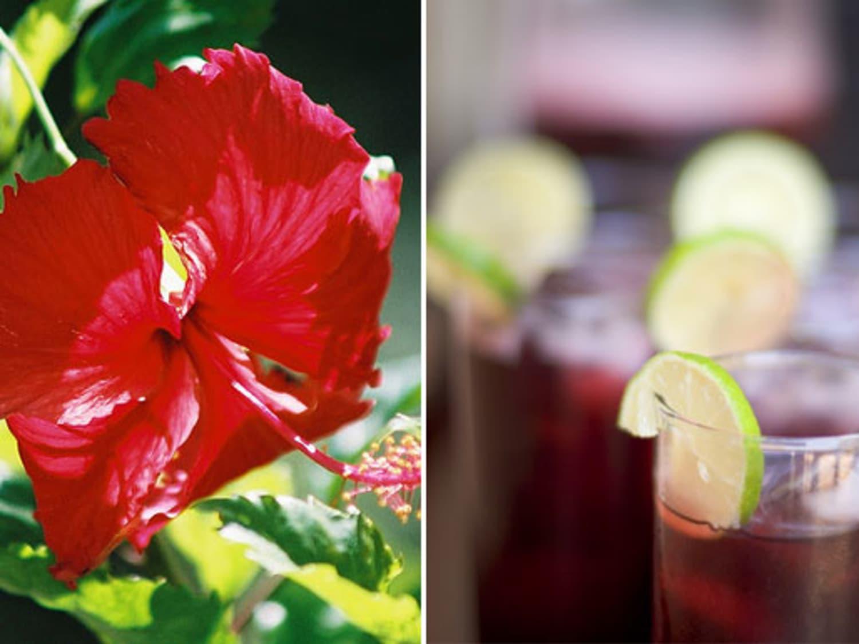 Sorrel Bissap Jamaica Hibiscus Tea Around The World Kitchn