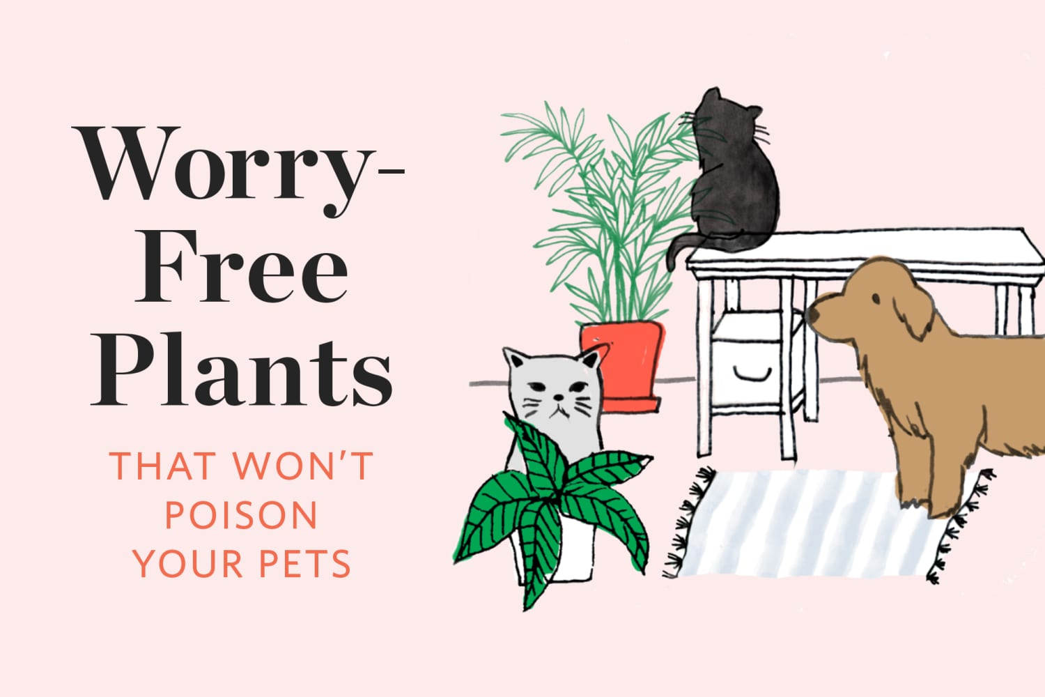 Worry-Free Plants That Won't Poison Your Pets