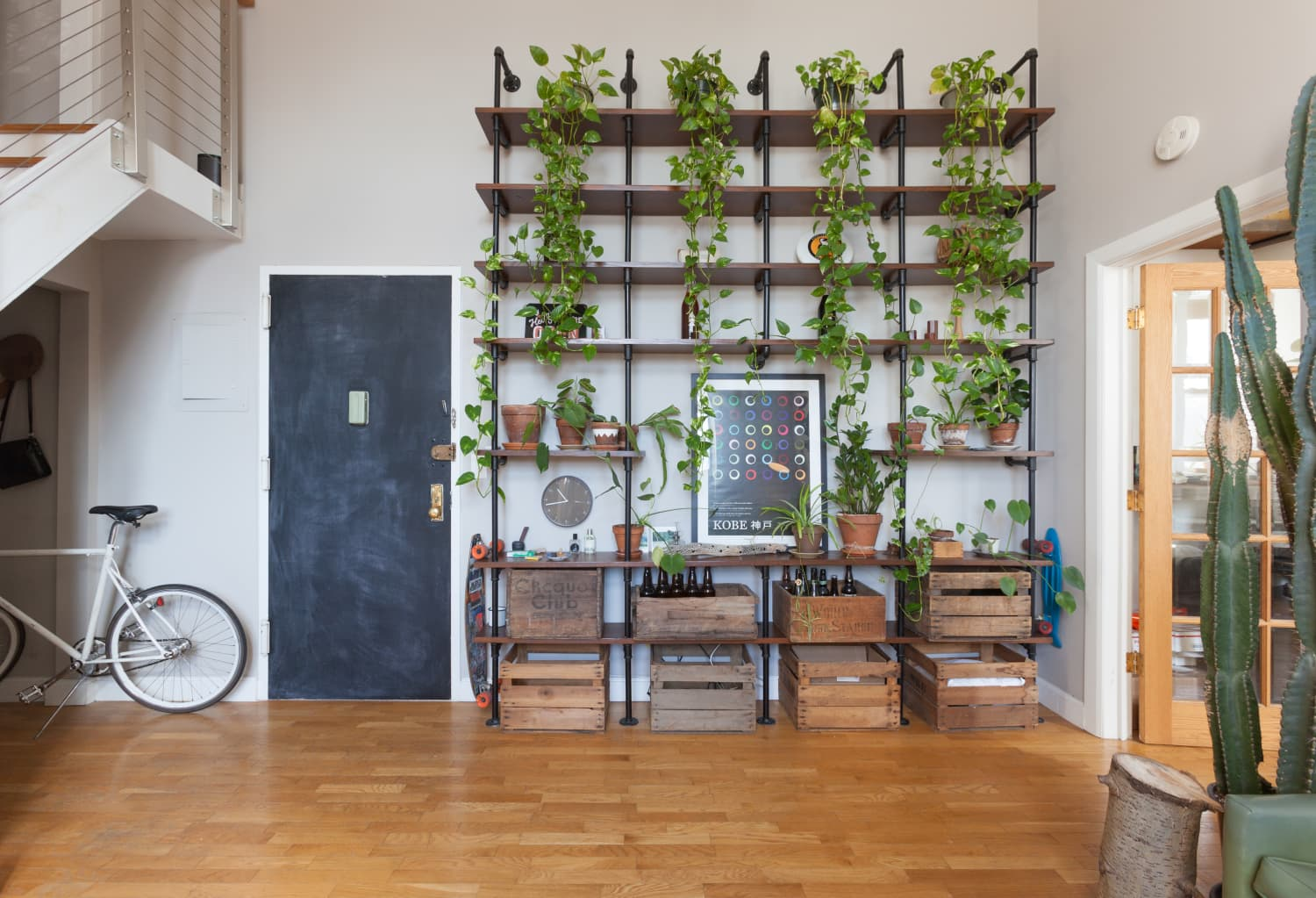 The Heartleaf Philodendron is Harder to Kill Than To Keep Alive
