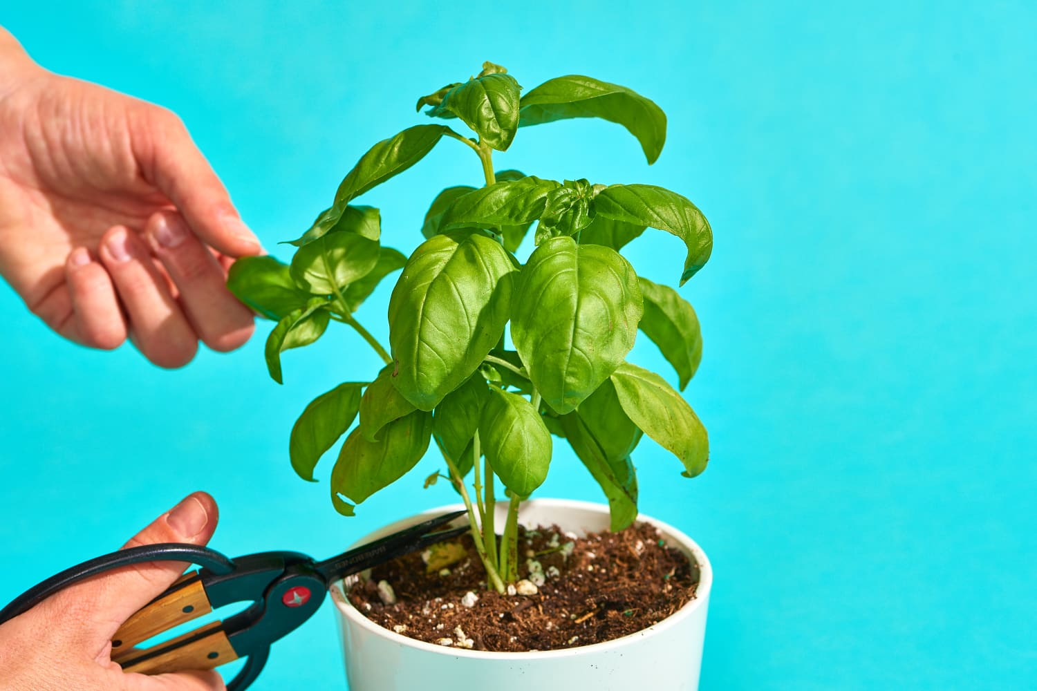 There's A Wrong Way to Grow Basil, And Then There's This Way