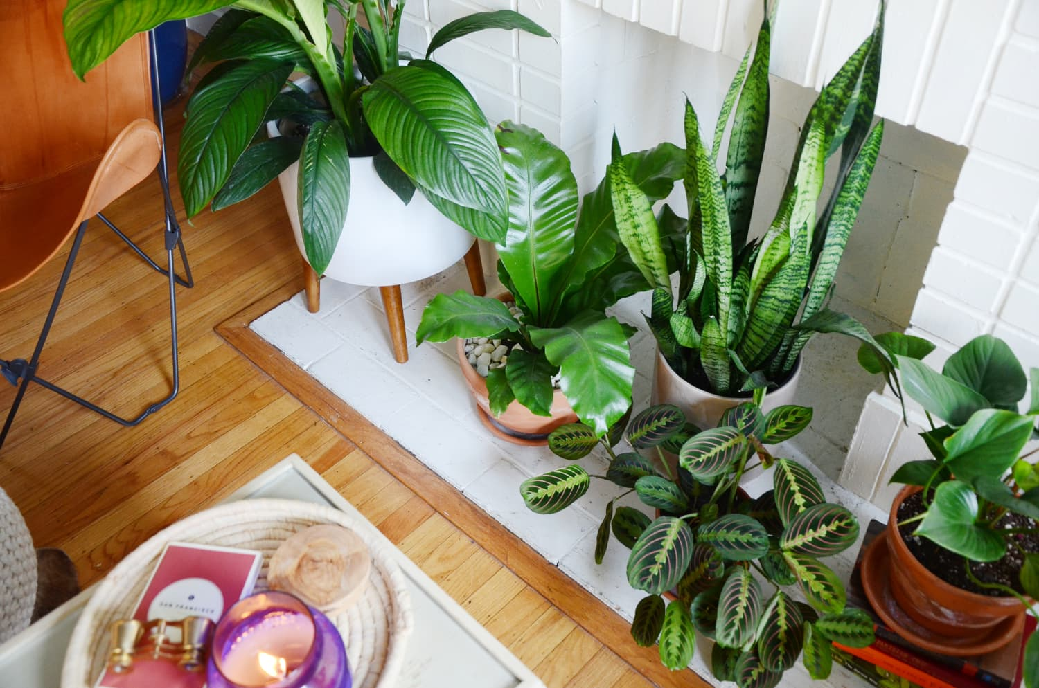 5 Houseplants You Can't Kill by Overwatering