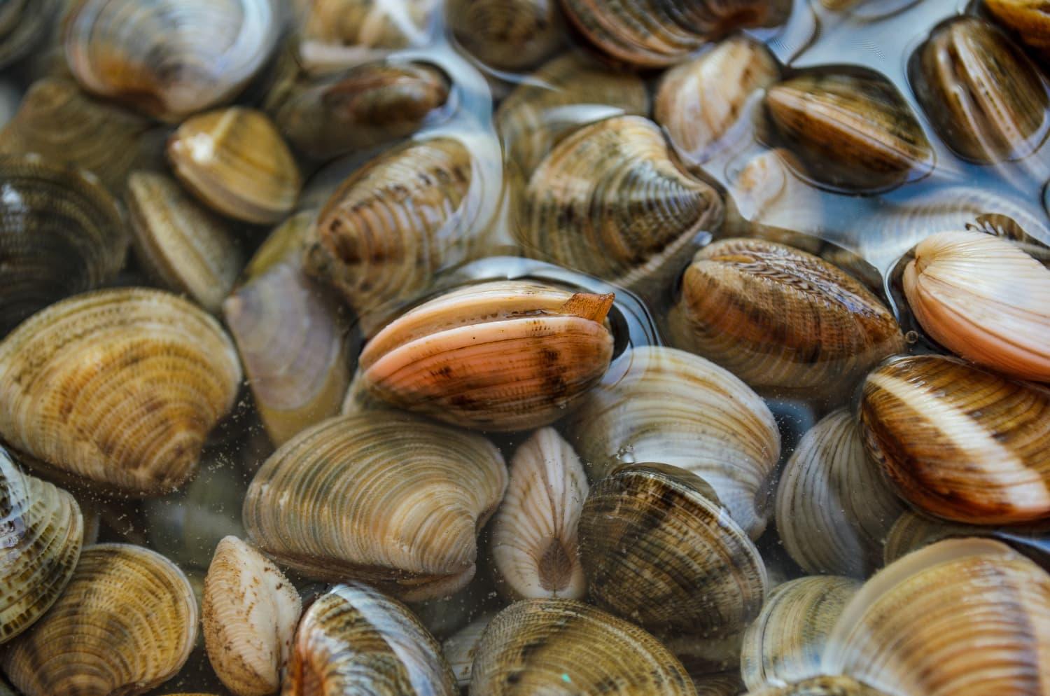 How To Clean the Sand Out of Clams