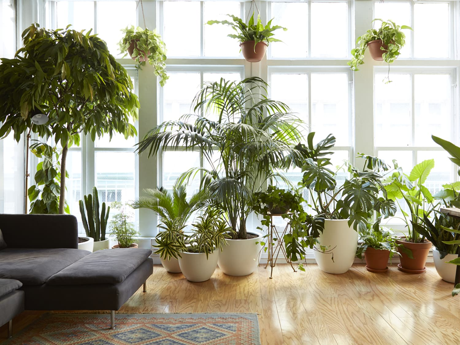 8 Houseplants that Can Survive Urban Apartments, Low Light and Under-Watering