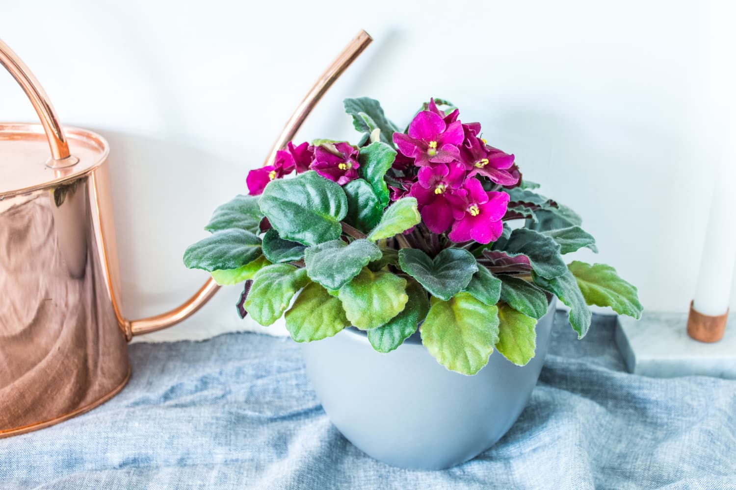 5 Small Indoor Plants You'll Want to Smother with Love