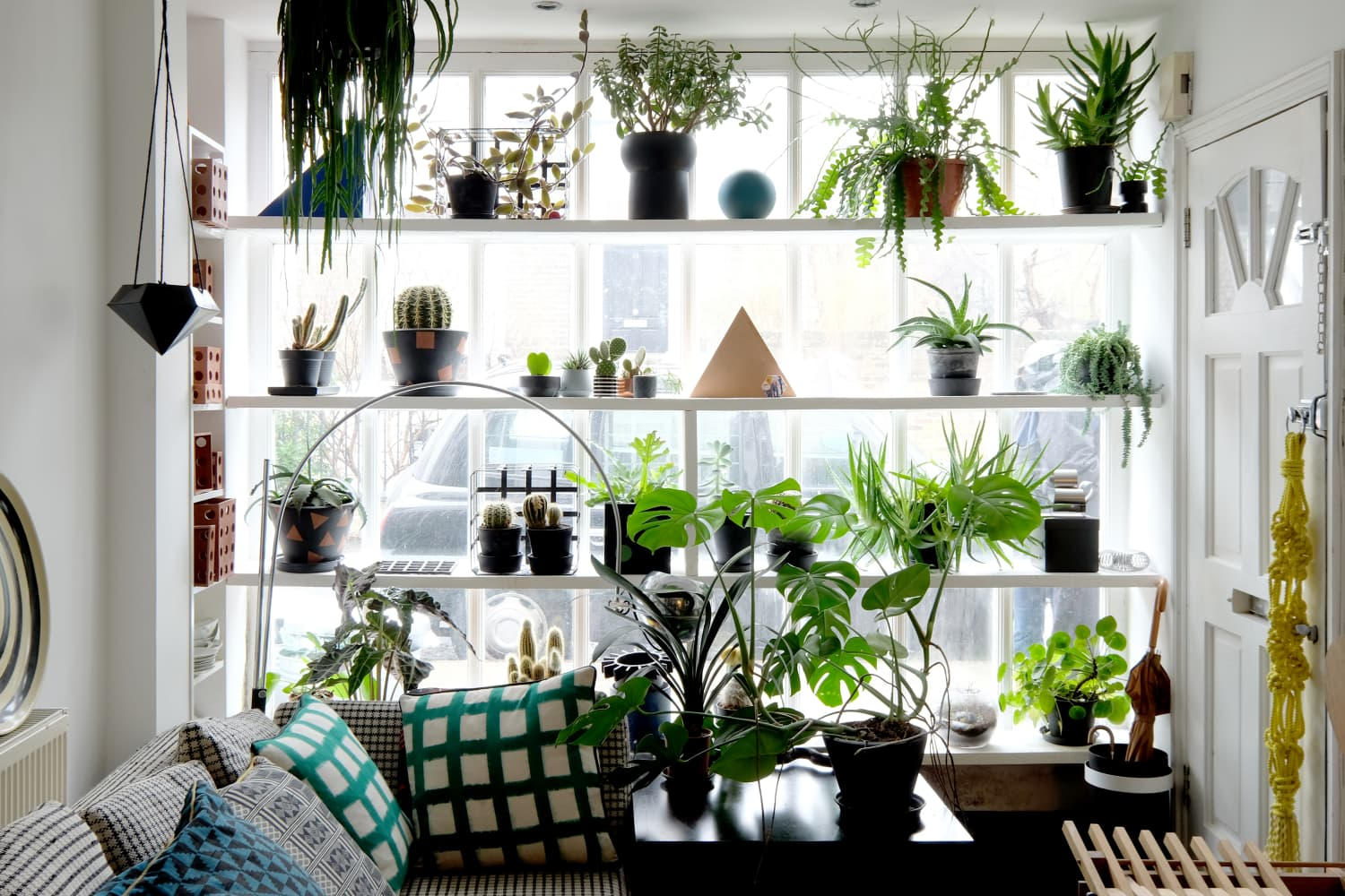 Oddly Intriguing Indoor Plants You've Probably Never Heard Of