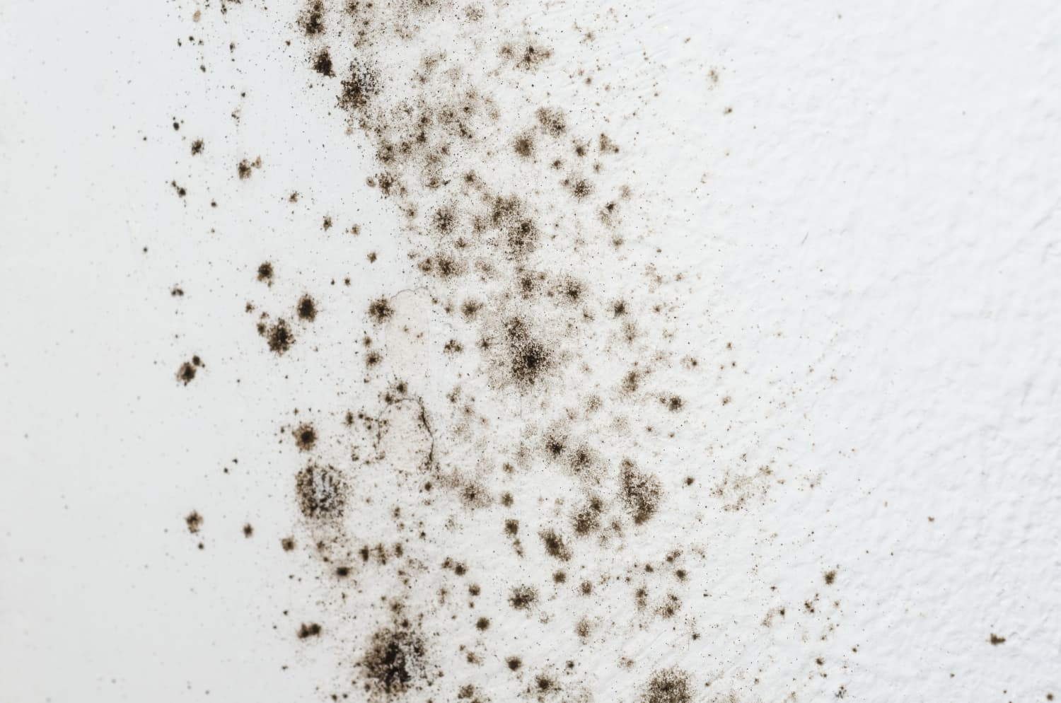 The Dreaded Black Mold: Is It Affecting Your Household?