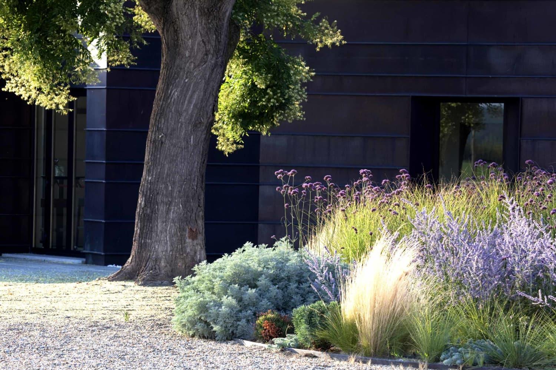 Ornamental Grass Is a Low-Maintenance, Drought-Resistant Plant Wonder